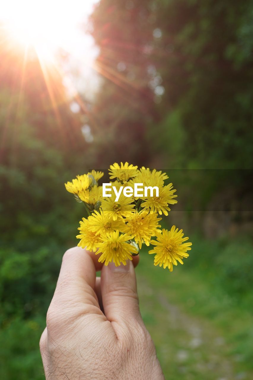 human hand, hand, human body part, flower, flowering plant, plant, one person, holding, yellow, fragility, body part, nature, real people, finger, vulnerability, human finger, focus on foreground, freshness, day, sunlight, outdoors, flower head, lens flare