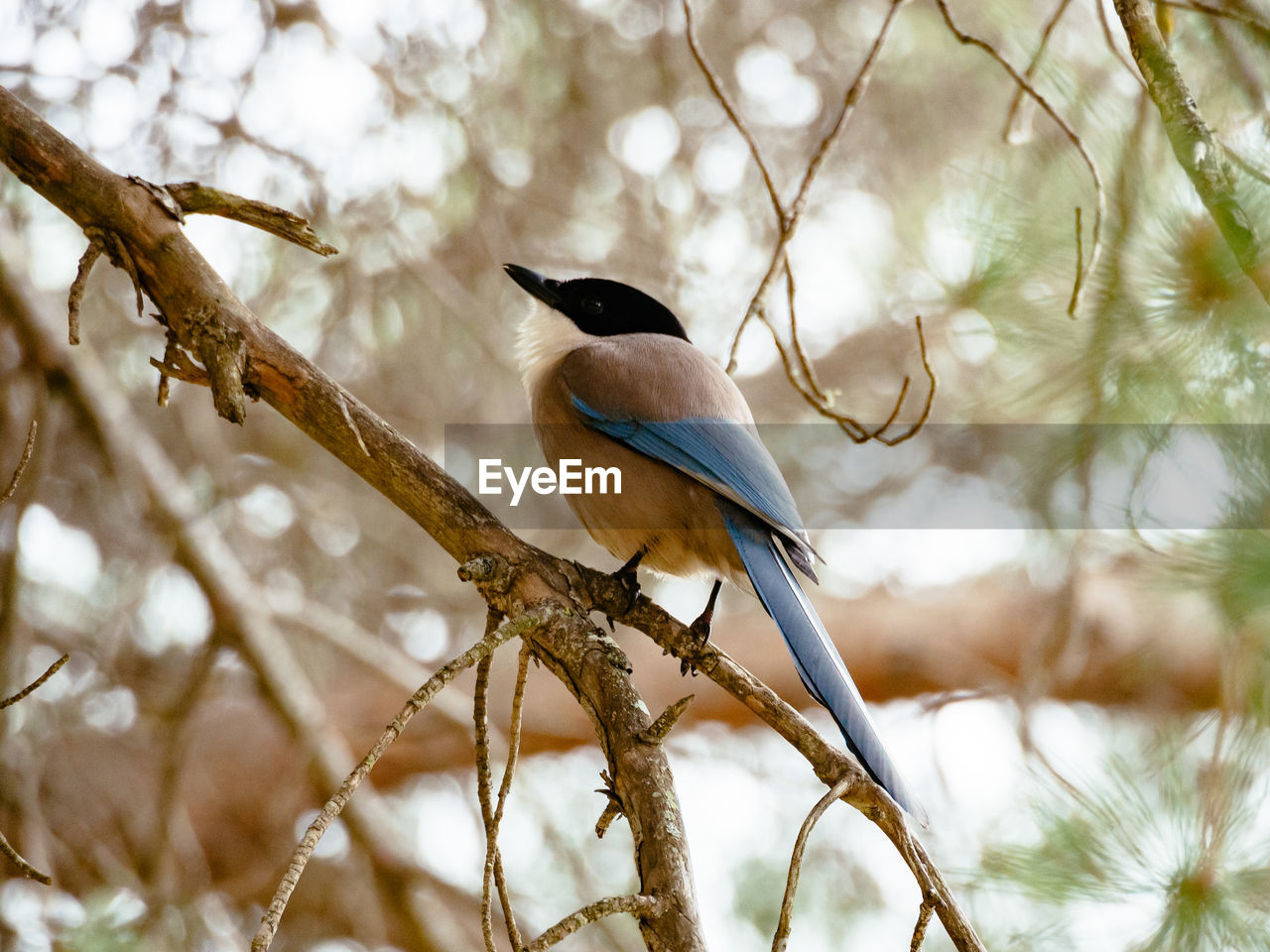 vertebrate, perching, bird, animals in the wild, animal wildlife, branch, animal themes, tree, one animal, animal, plant, no people, focus on foreground, low angle view, nature, day, beauty in nature, outdoors, close-up, selective focus