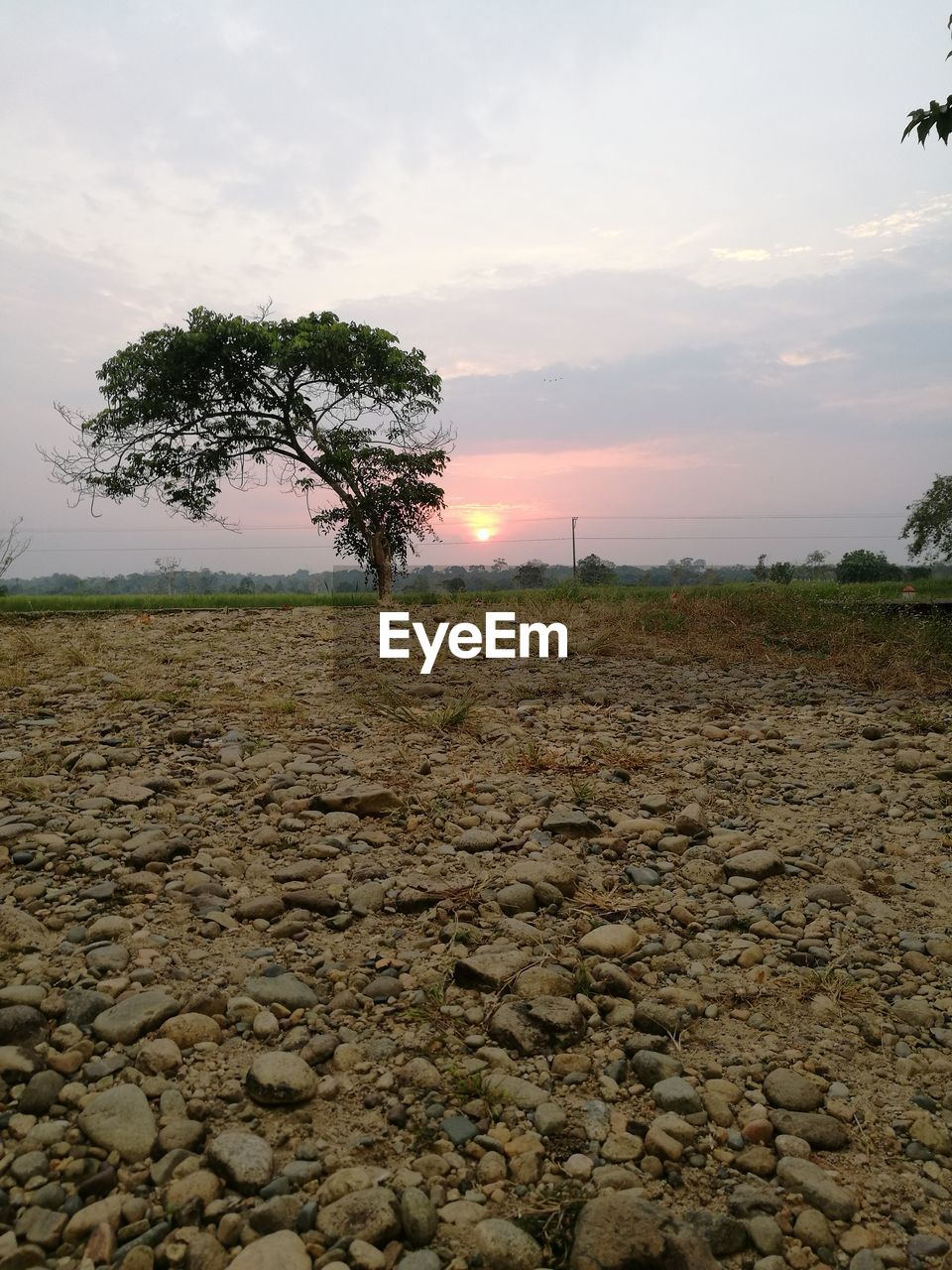 tree, landscape, nature, sky, tranquility, tranquil scene, beauty in nature, cloud - sky, scenics, sunset, no people, field, outdoors, day