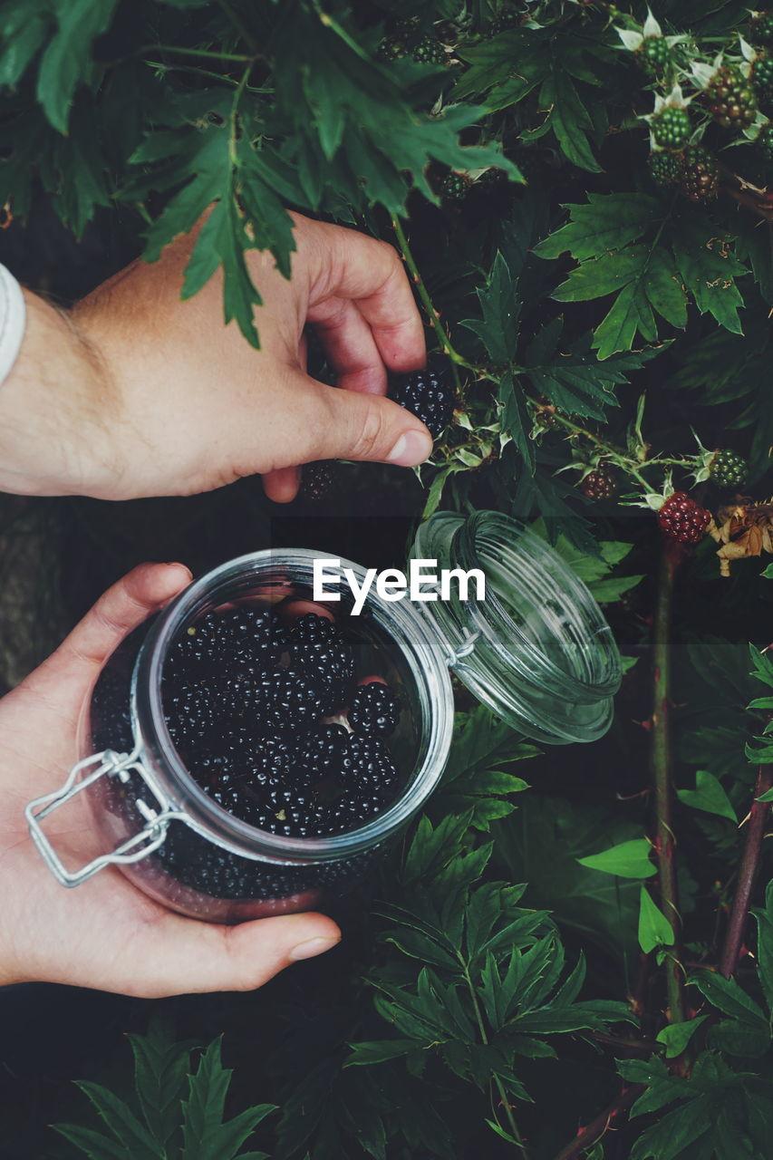 Cropped Hands Picking Blackberries In Jar