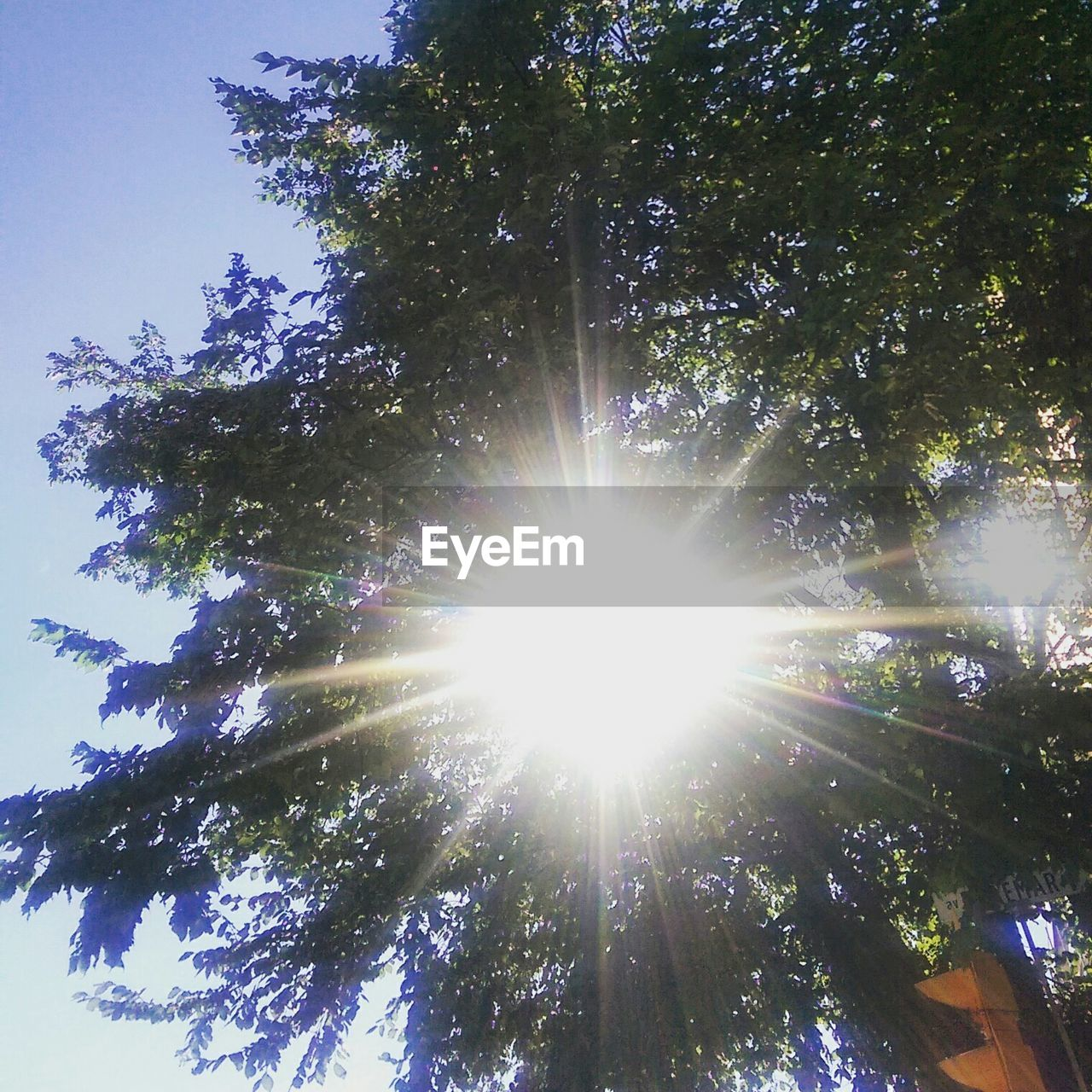 low angle view, tree, sunbeam, lens flare, sun, nature, sunlight, growth, beauty in nature, tranquility, no people, sky, outdoors, scenics, day, tree trunk, branch