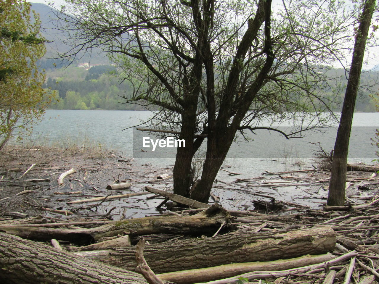 tree, plant, water, forest, tranquility, nature, land, wood, tree trunk, trunk, day, no people, lake, fallen tree, log, wood - material, beauty in nature, branch, non-urban scene, outdoors, driftwood, dead plant, woodland