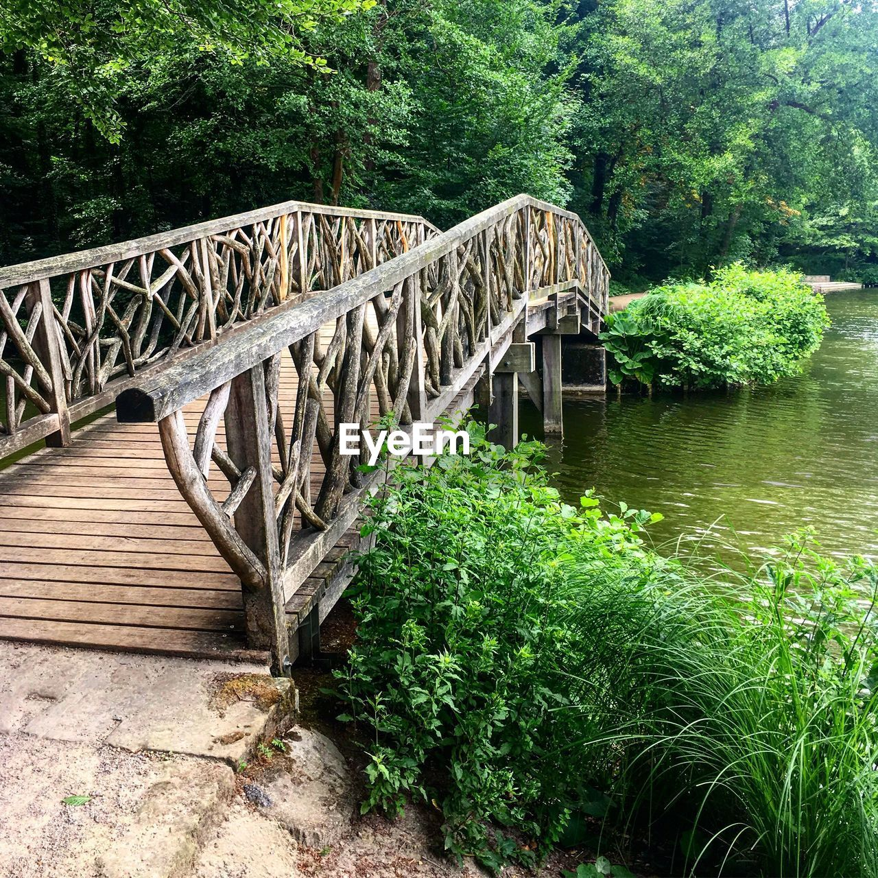 plant, tree, bridge, bridge - man made structure, water, connection, built structure, growth, architecture, forest, nature, no people, green color, day, river, footbridge, beauty in nature, railing, land, outdoors, wood, arch bridge, flowing water