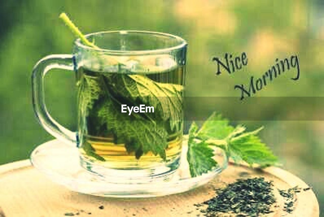 food and drink, green color, healthy eating, drink, herb, tea - hot drink, refreshment, mint tea, freshness, no people, herbal tea, green tea, mint leaf - culinary, herbal medicine, healthy lifestyle, indoors, close-up, day