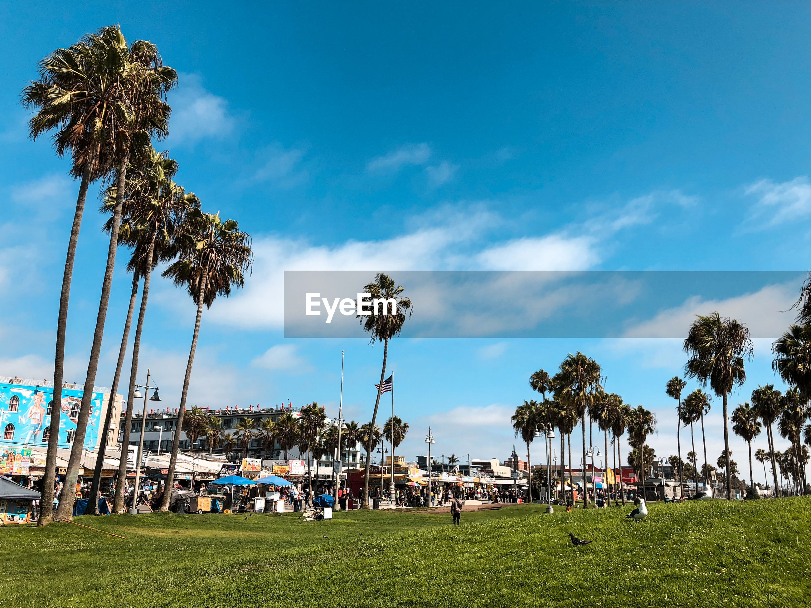 GROUP OF PEOPLE BY PALM TREES AGAINST SKY