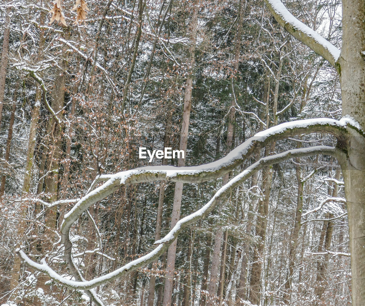tree, branch, winter, nature, forest, cold temperature, beauty in nature, day, no people, snow, tranquility, outdoors, bare tree, scenics, close-up