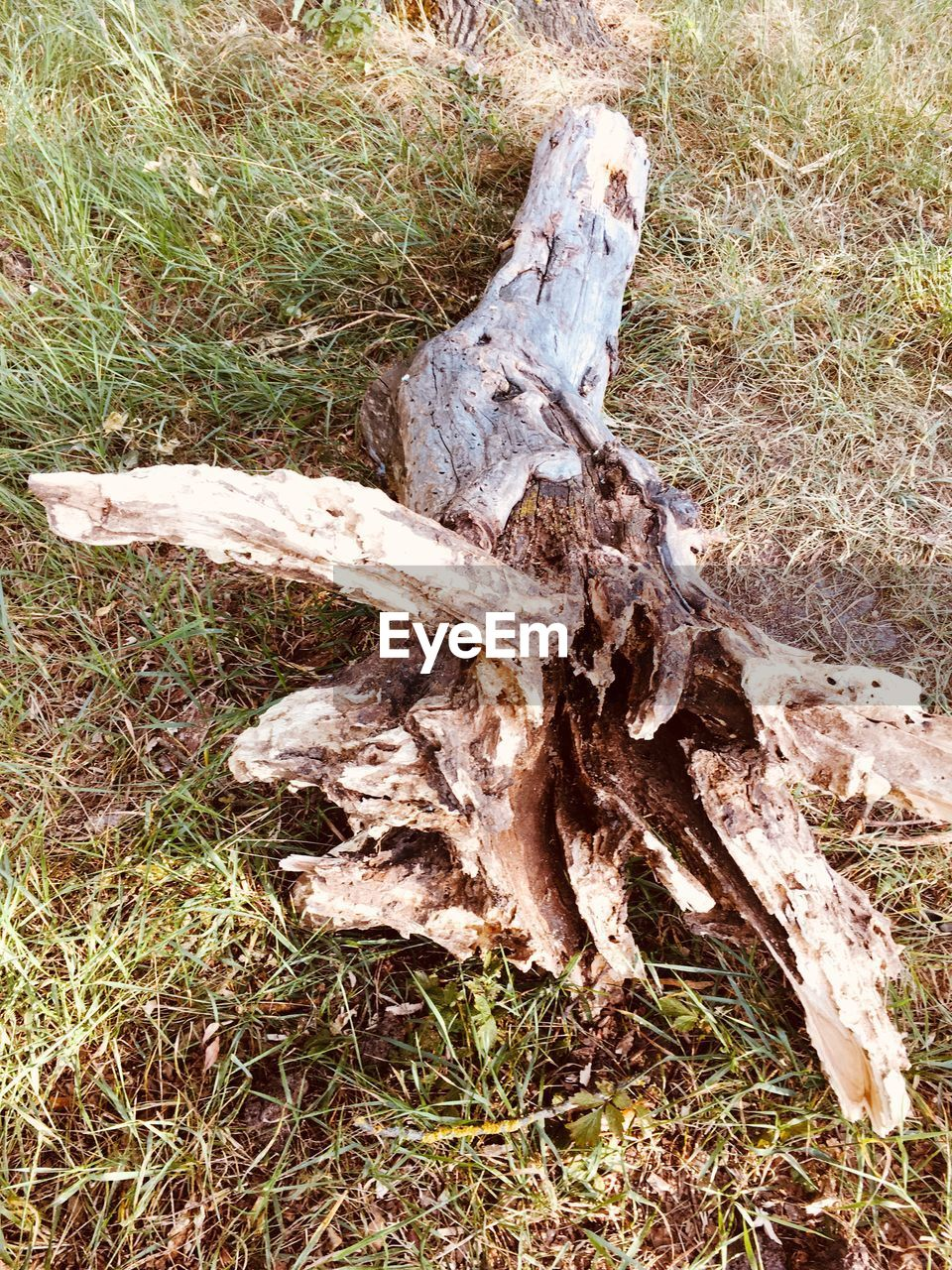 land, plant, field, grass, tree, nature, no people, wood - material, bone, day, forest, close-up, high angle view, tree trunk, outdoors, wood, log, trunk, animal skull, bark, dead plant, driftwood