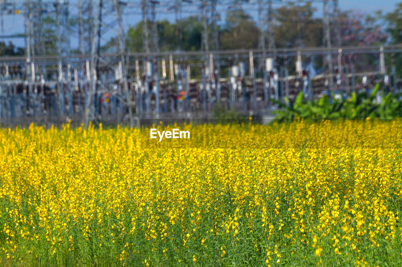 yellow, plant, flower, beauty in nature, field, flowering plant, growth, agriculture, freshness, land, day, abundance, nature, landscape, no people, crop, rural scene, springtime, oilseed rape, tranquility, outdoors, flowerbed