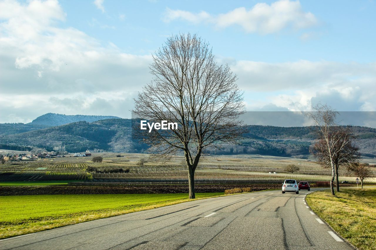 transportation, sky, tree, cloud - sky, road, plant, environment, landscape, nature, mode of transportation, bare tree, scenics - nature, motor vehicle, car, direction, the way forward, beauty in nature, day, mountain, field, no people, outdoors