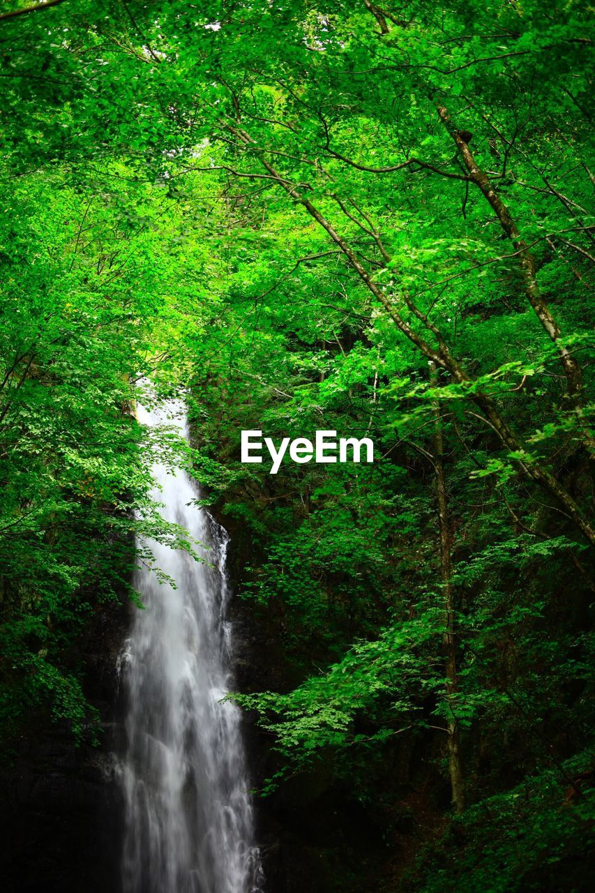 plant, tree, forest, water, land, beauty in nature, motion, green color, scenics - nature, waterfall, nature, growth, flowing water, no people, long exposure, foliage, lush foliage, day, environment, outdoors, flowing, rainforest, woodland, power in nature