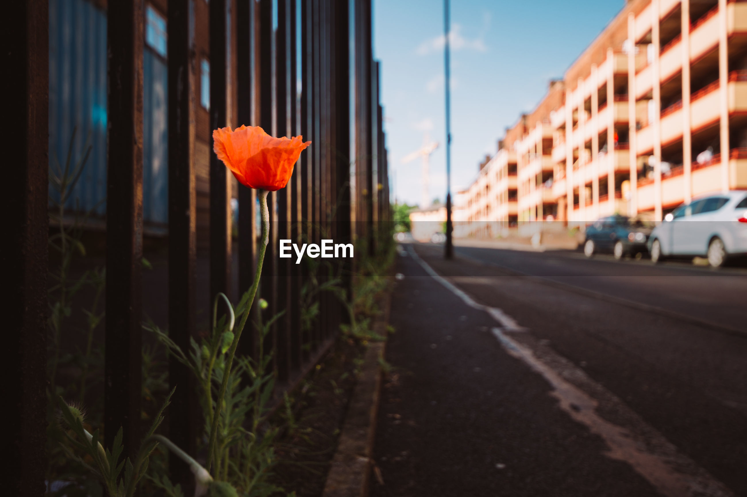 Flower by road against sky