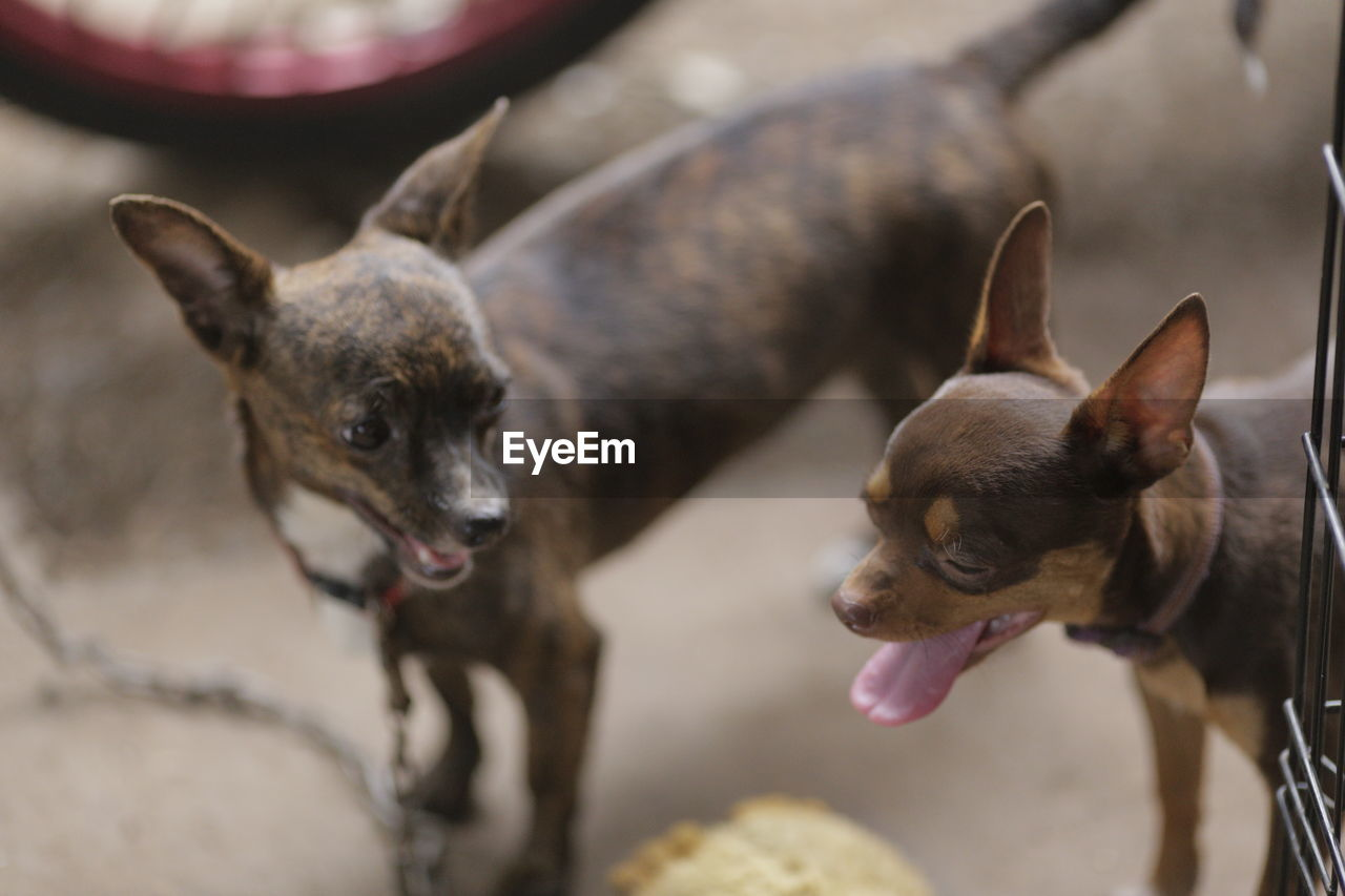 CLOSE-UP OF DOGS