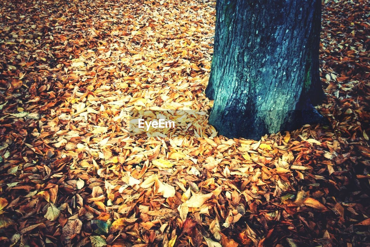 Fallen leaves around tree trunk