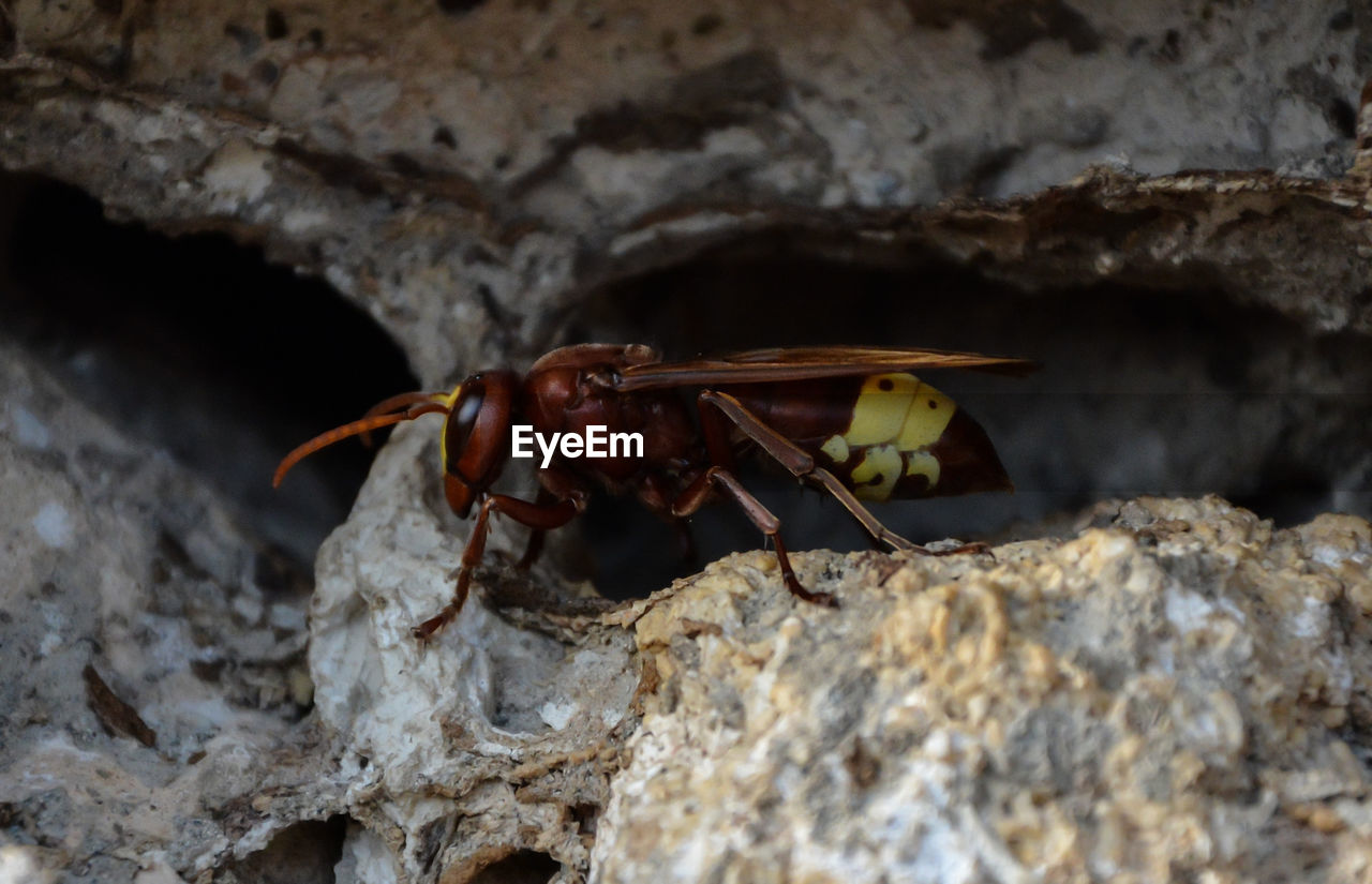 animals in the wild, animal themes, animal wildlife, animal, one animal, invertebrate, rock, insect, rock - object, solid, close-up, no people, day, nature, outdoors, selective focus, focus on foreground, animal body part, animal wing, crustacean