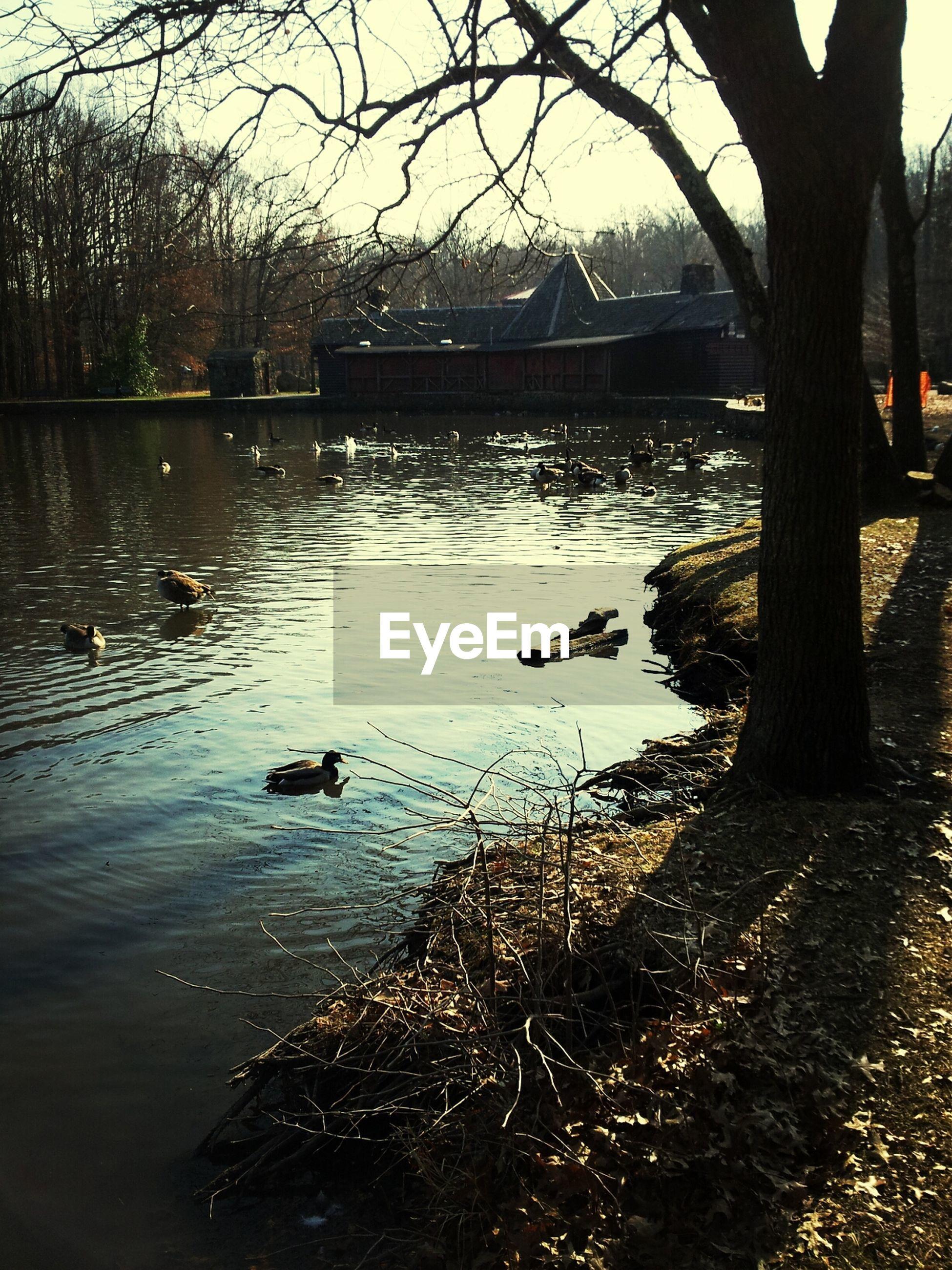 High angle view ducks in lake
