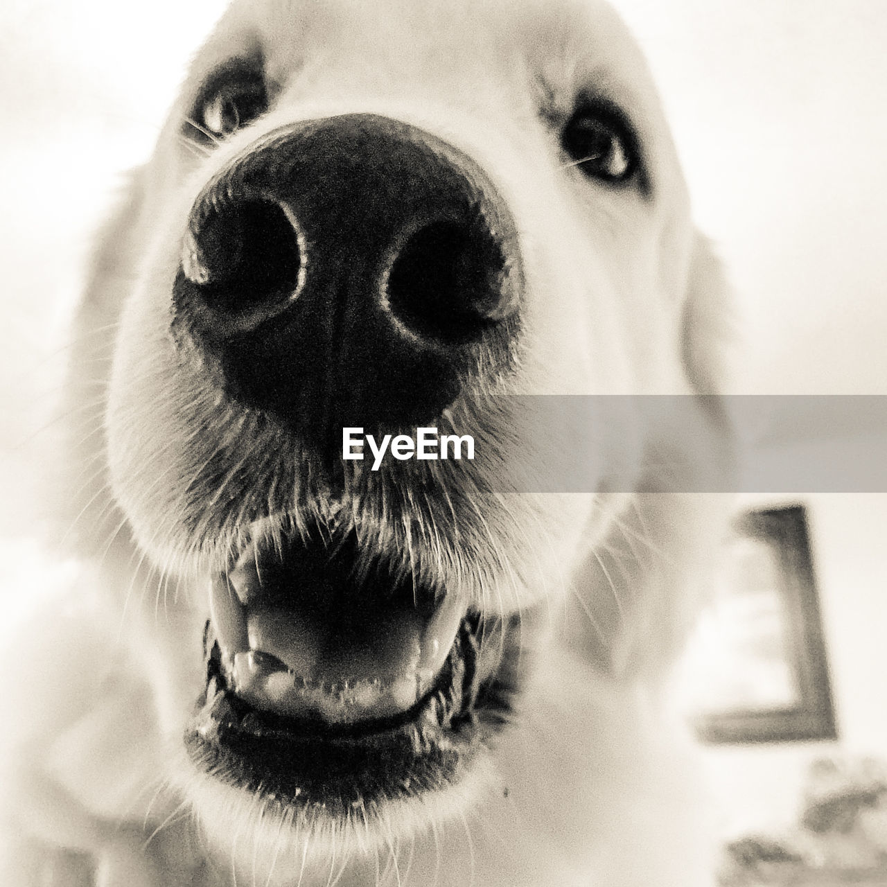 dog, one animal, pets, domestic animals, animal themes, animal head, mammal, portrait, looking at camera, close-up, animal nose, no people, indoors, day