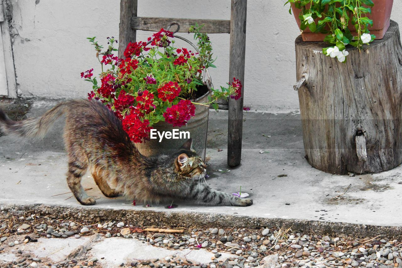 animal themes, animal, mammal, one animal, vertebrate, domestic cat, feline, plant, cat, flower, flowering plant, domestic, pets, no people, day, domestic animals, nature, relaxation, outdoors, wall - building feature, whisker