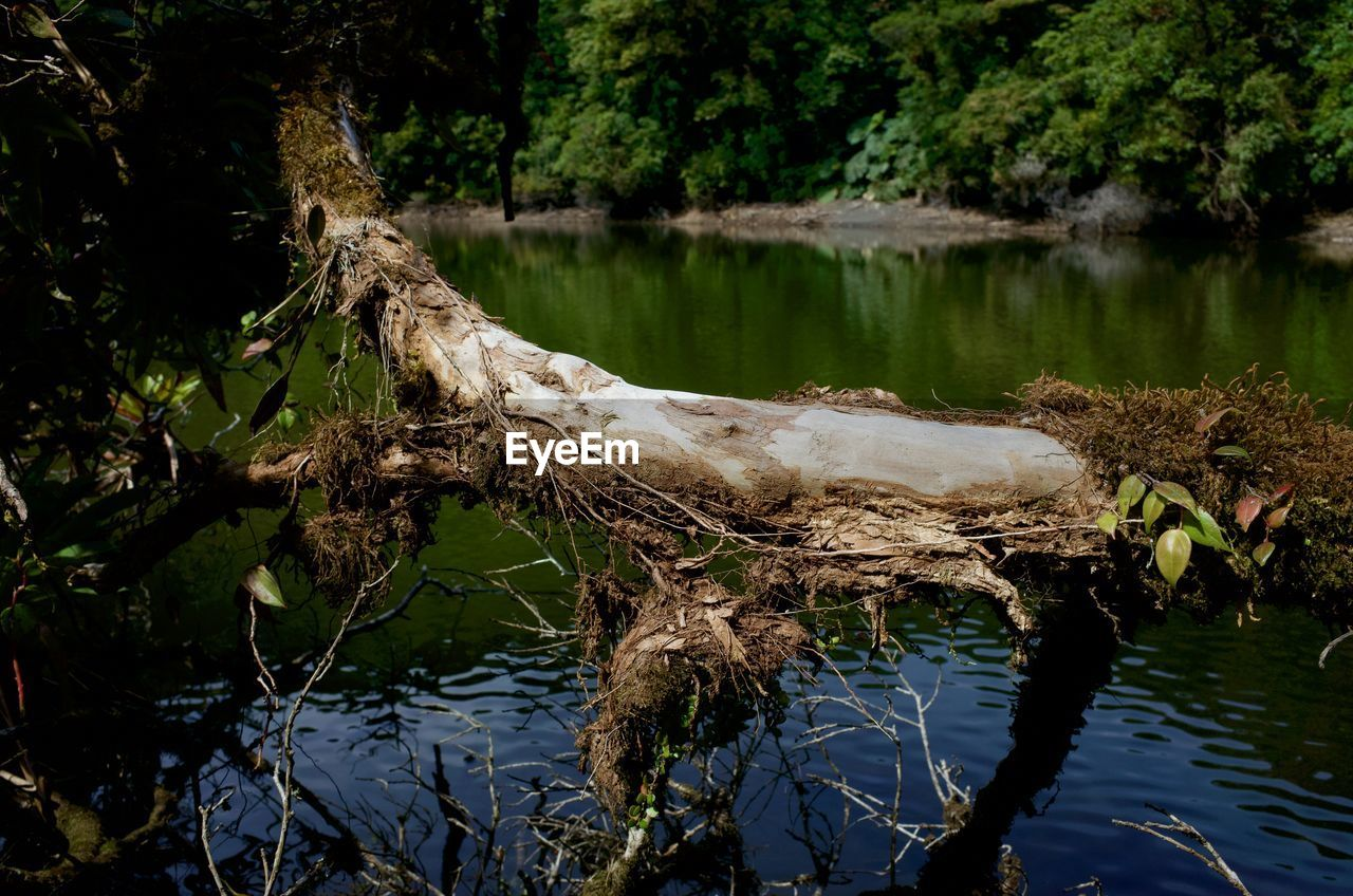 water, tree, lake, plant, reflection, nature, tranquility, day, no people, beauty in nature, waterfront, growth, forest, trunk, outdoors, tree trunk, tranquil scene, scenics - nature, driftwood