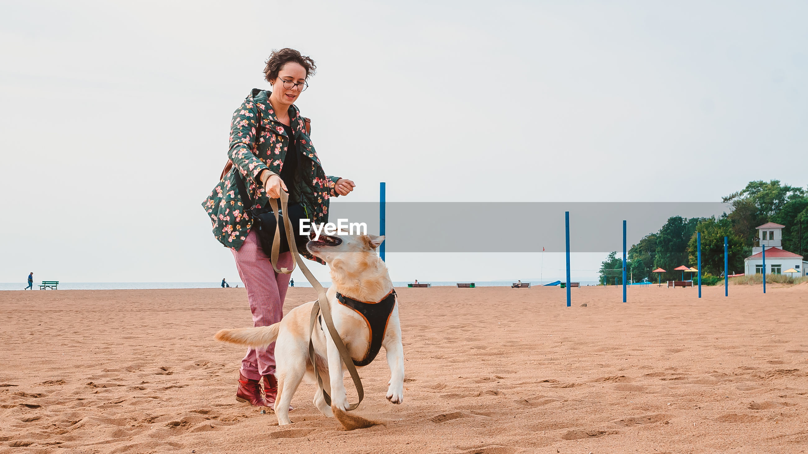 A girl and a fawn labrador retriever play on a sandy beach in autumn. traveling with a dog