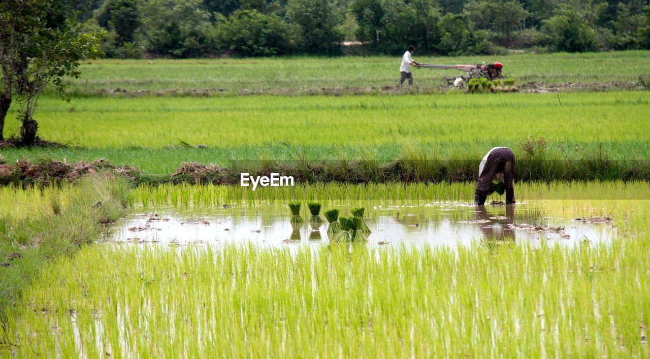 Man Planting Crops On Field