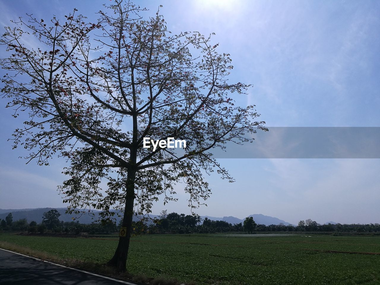 tree, sky, plant, field, landscape, tranquility, beauty in nature, nature, tranquil scene, land, environment, cloud - sky, scenics - nature, growth, no people, day, grass, outdoors, non-urban scene, idyllic