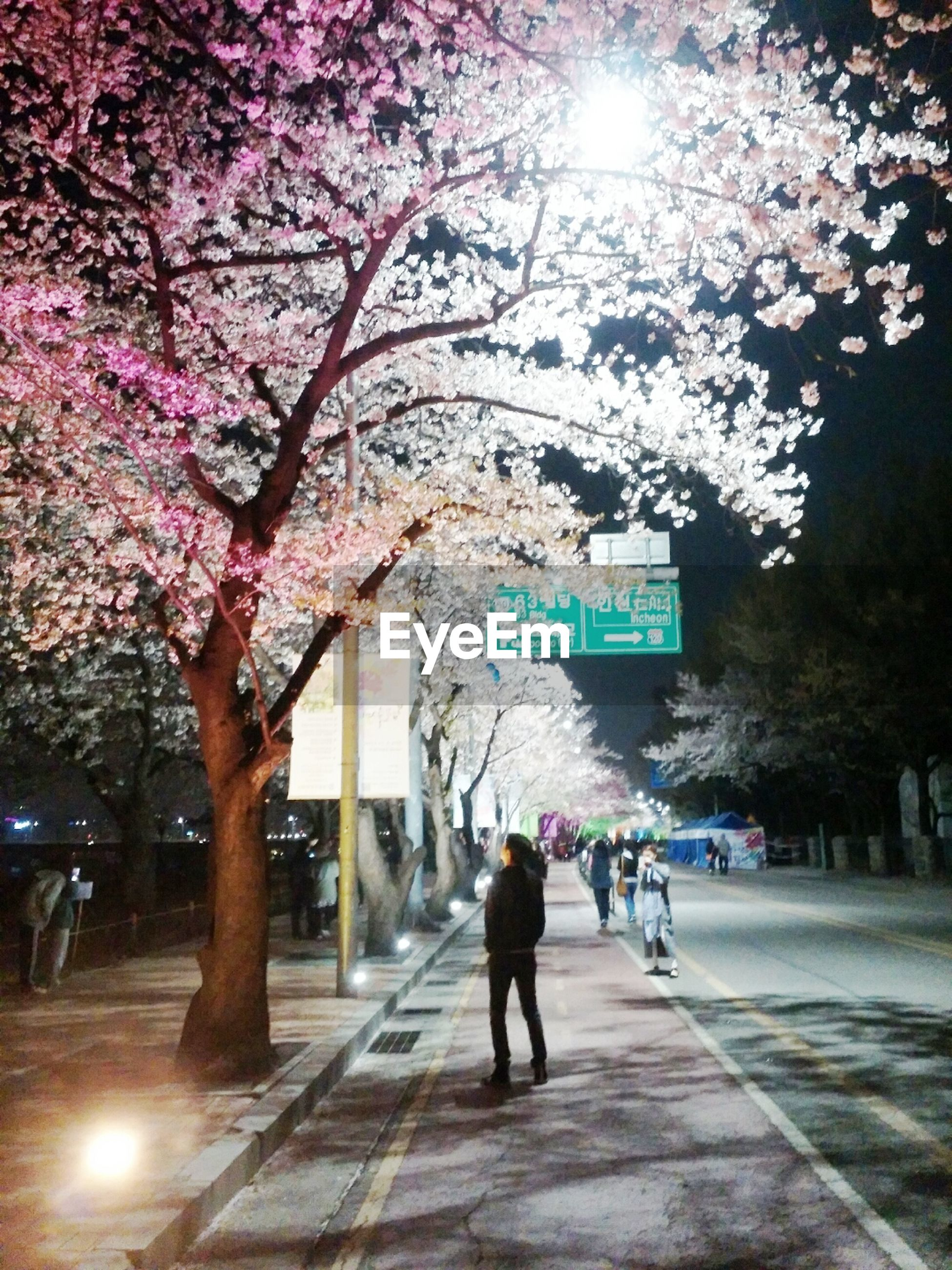 tree, walking, lifestyles, men, person, full length, leisure activity, sunlight, city, city life, street, large group of people, growth, illuminated, flower, rear view, medium group of people, the way forward, outdoors