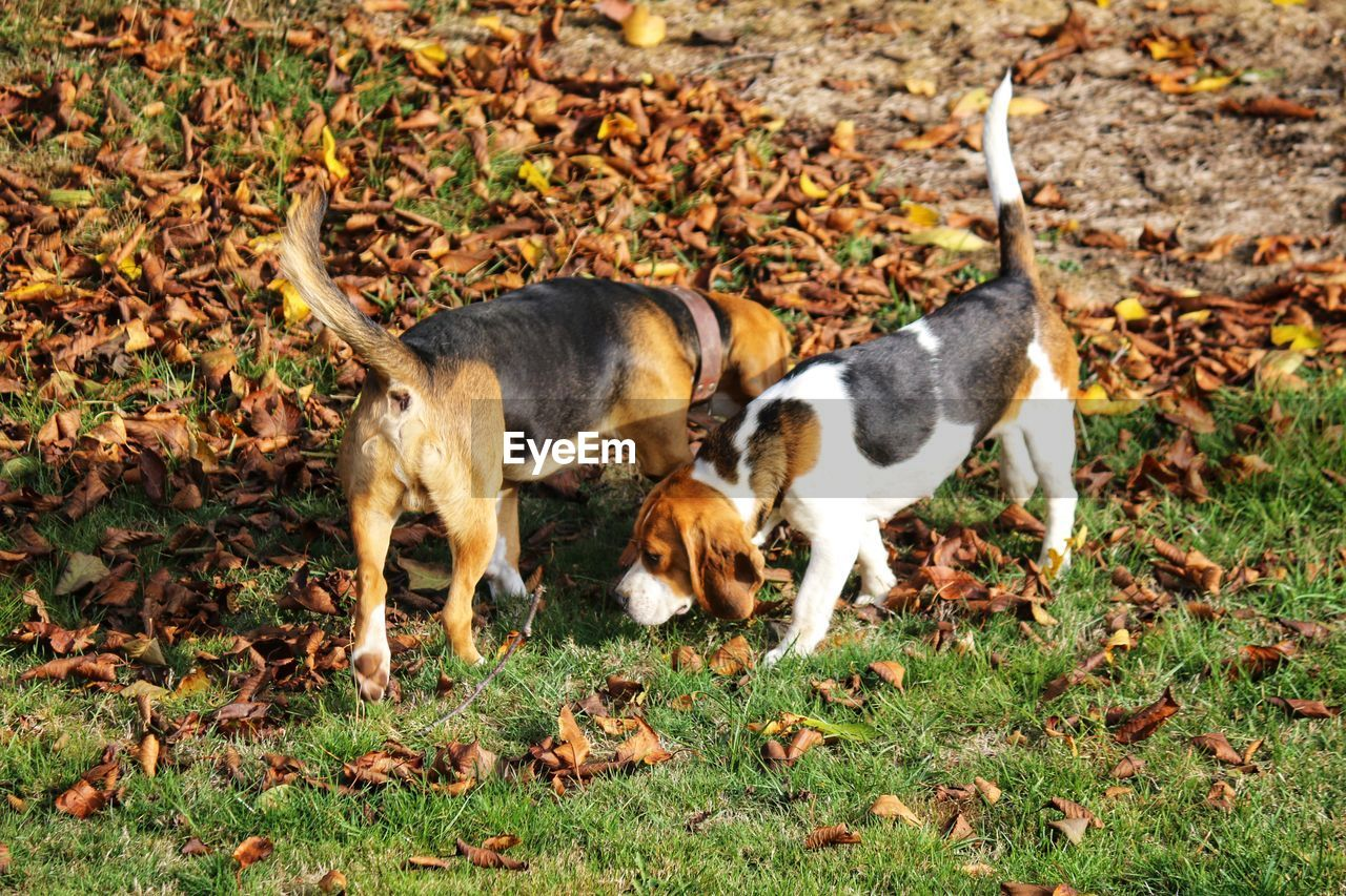 mammal, animal themes, animal, domestic animals, domestic, pets, vertebrate, field, land, group of animals, plant part, leaf, nature, young animal, no people, canine, plant, dog, grass, day, leaves, animal family