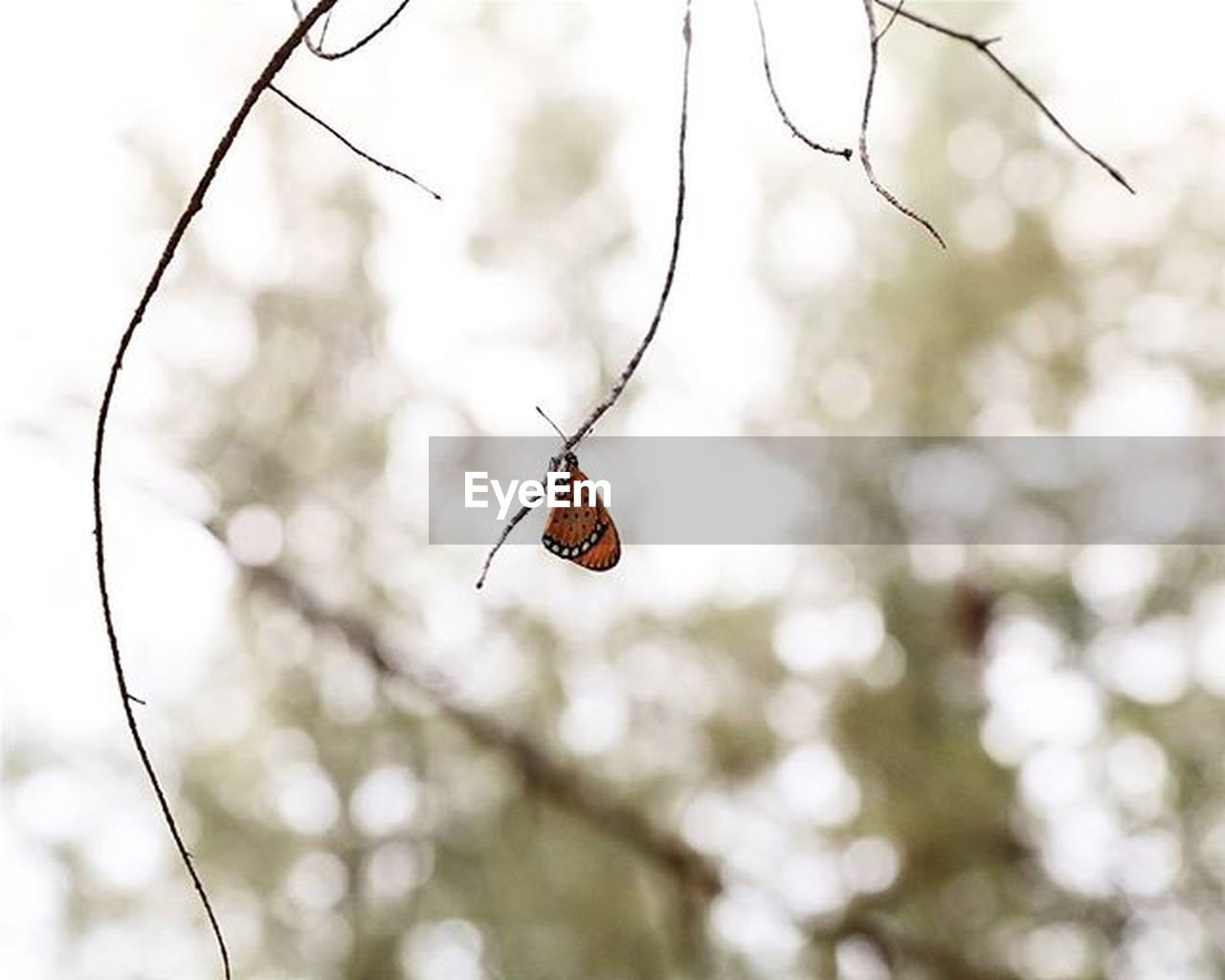 one animal, animals in the wild, insect, animal themes, focus on foreground, animal wildlife, nature, day, outdoors, branch, butterfly - insect, no people, tree, beauty in nature, perching, fragility, close-up