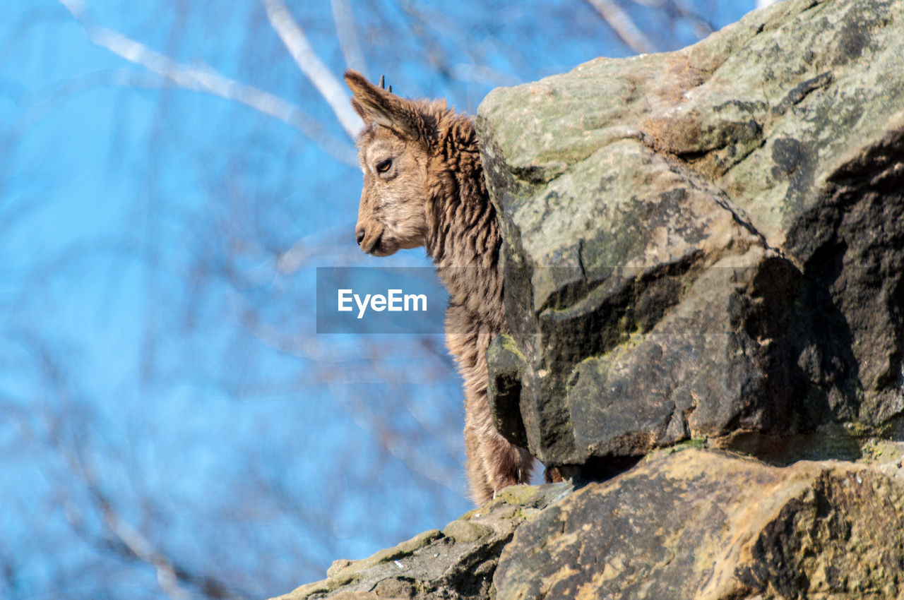 one animal, animal themes, animals in the wild, mammal, day, no people, animal wildlife, squirrel, outdoors, nature, close-up, sky