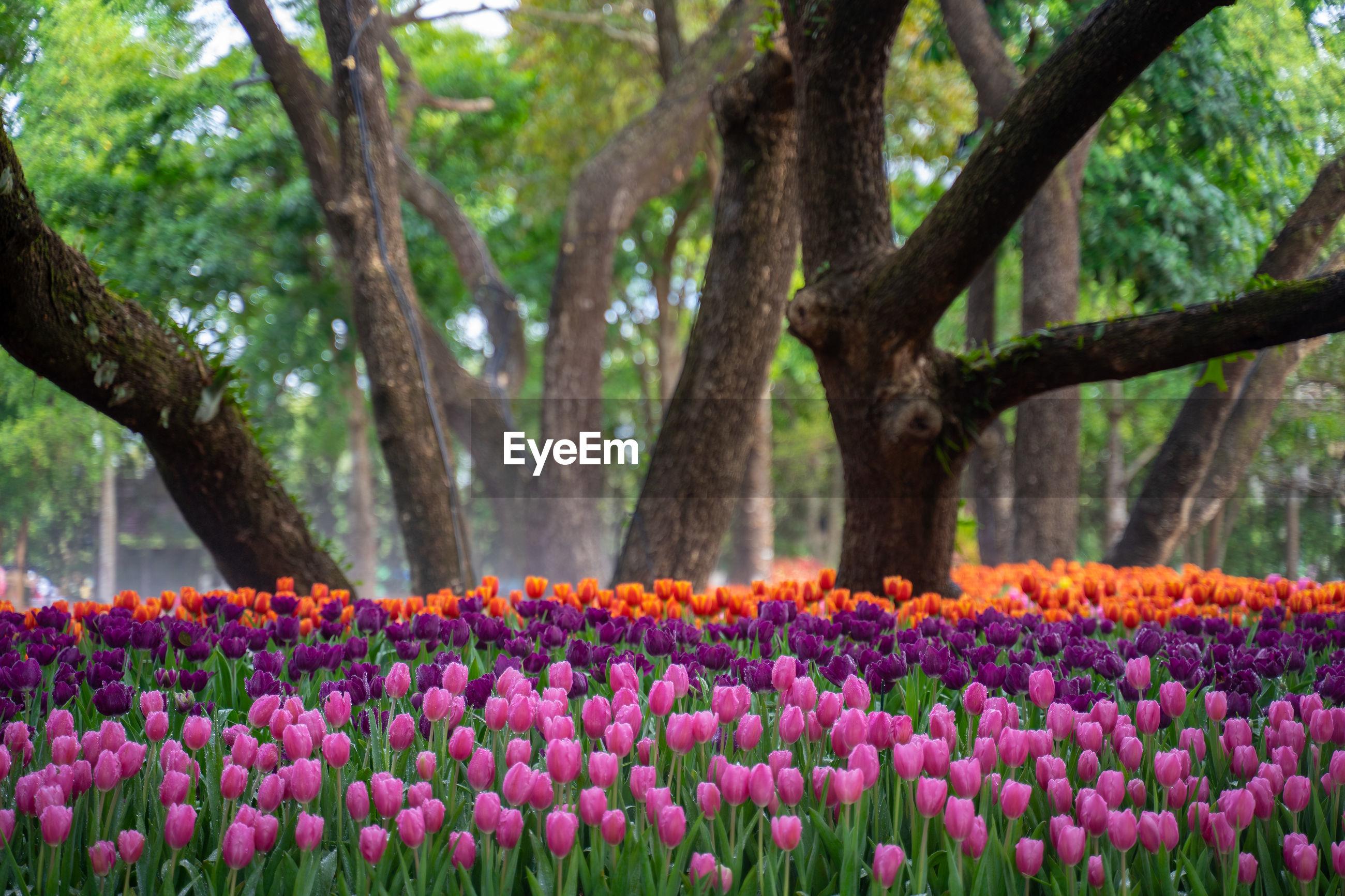 FRESH PINK FLOWERS IN PARK