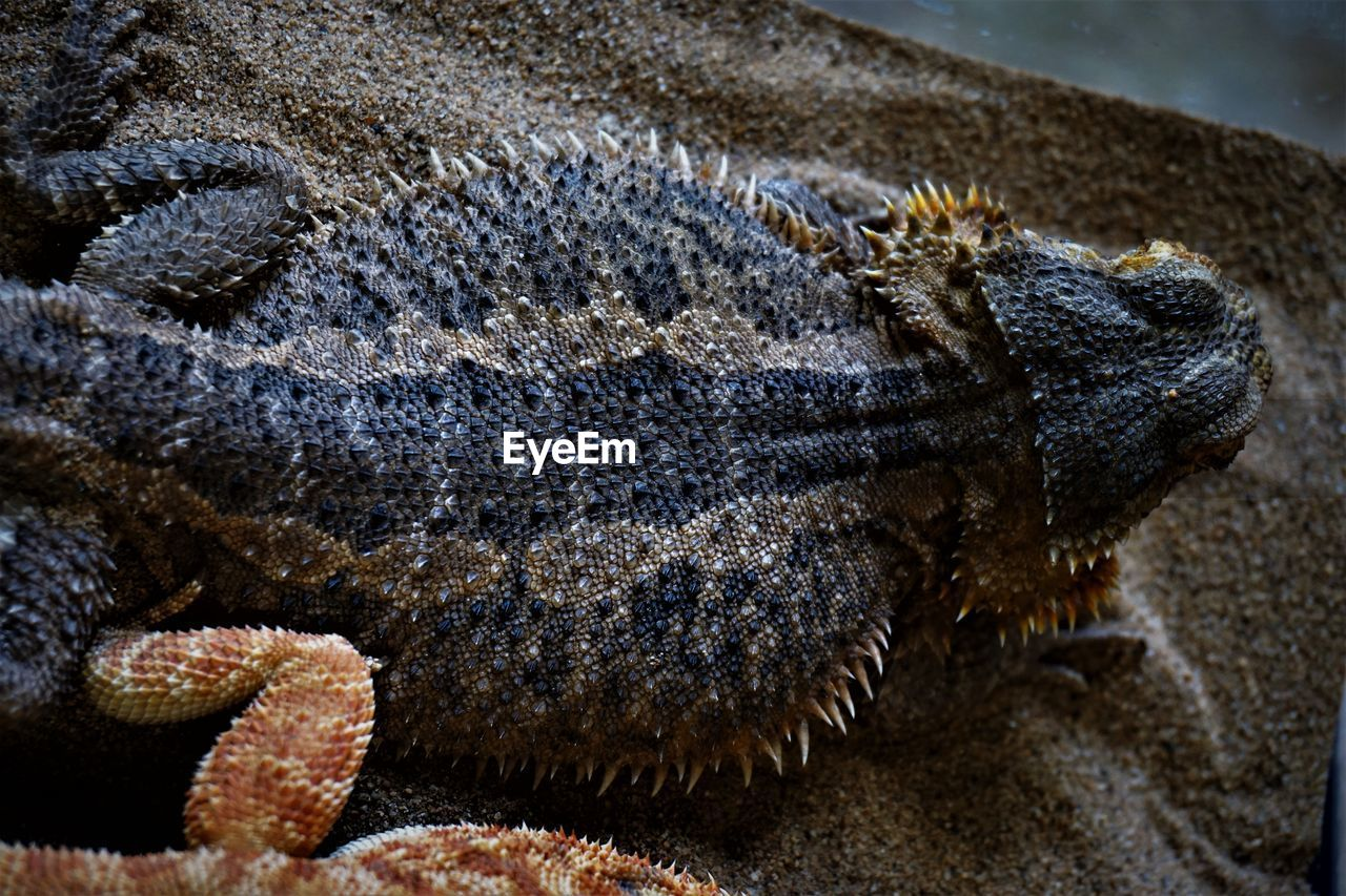 animal themes, animal, animal wildlife, one animal, animals in the wild, reptile, close-up, vertebrate, no people, animal body part, lizard, nature, outdoors, day, focus on foreground, communication, brown, textured, sign, zoology, animal head, animal scale, animal eye