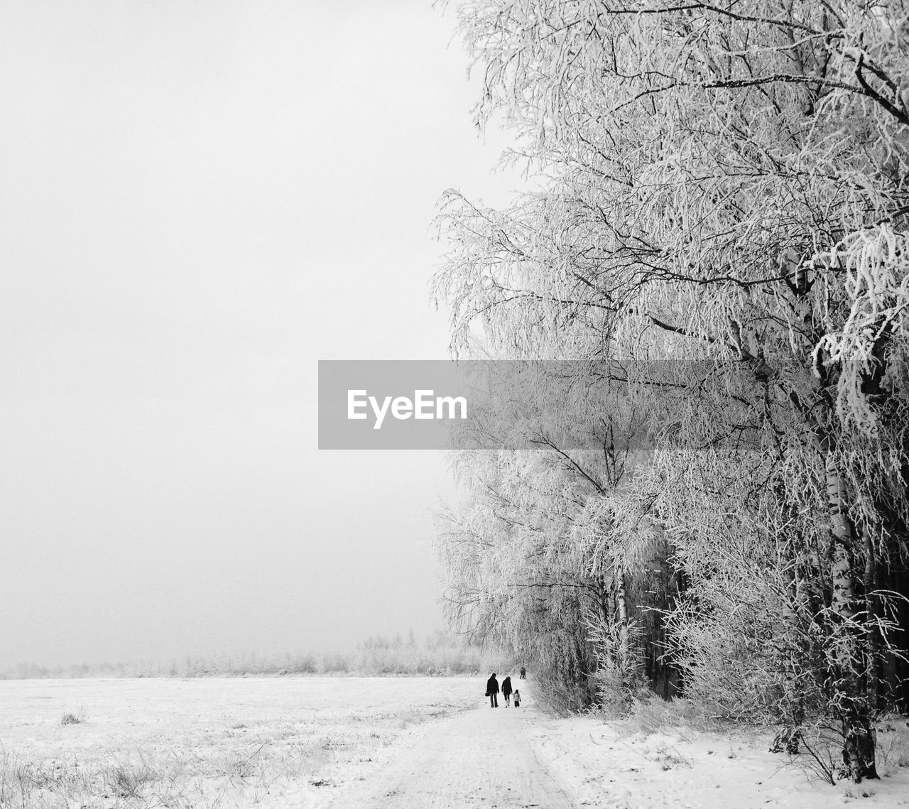 Three people walking on snow covered landscape along trees