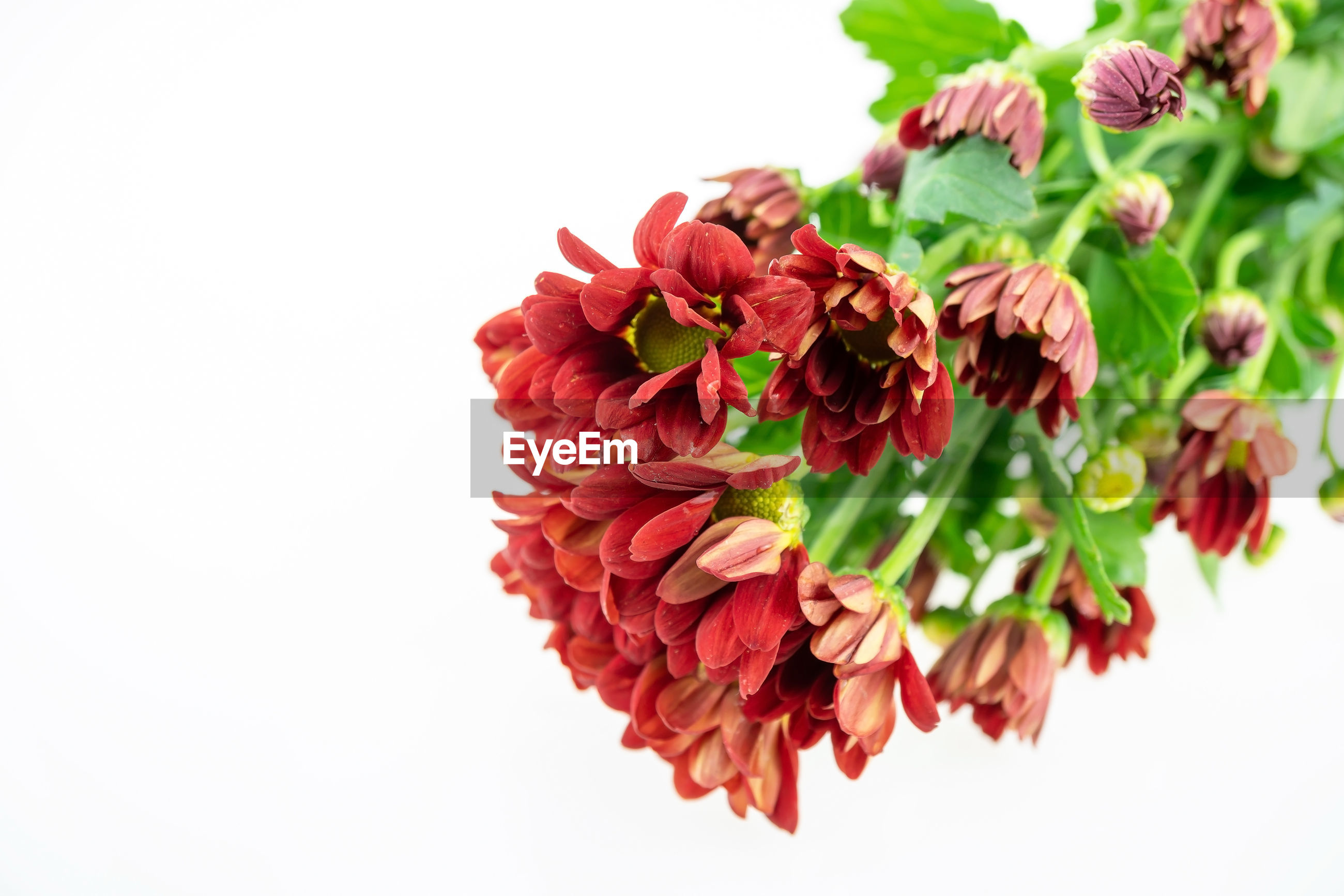HIGH ANGLE VIEW OF RED ROSE BOUQUET AGAINST WHITE BACKGROUND