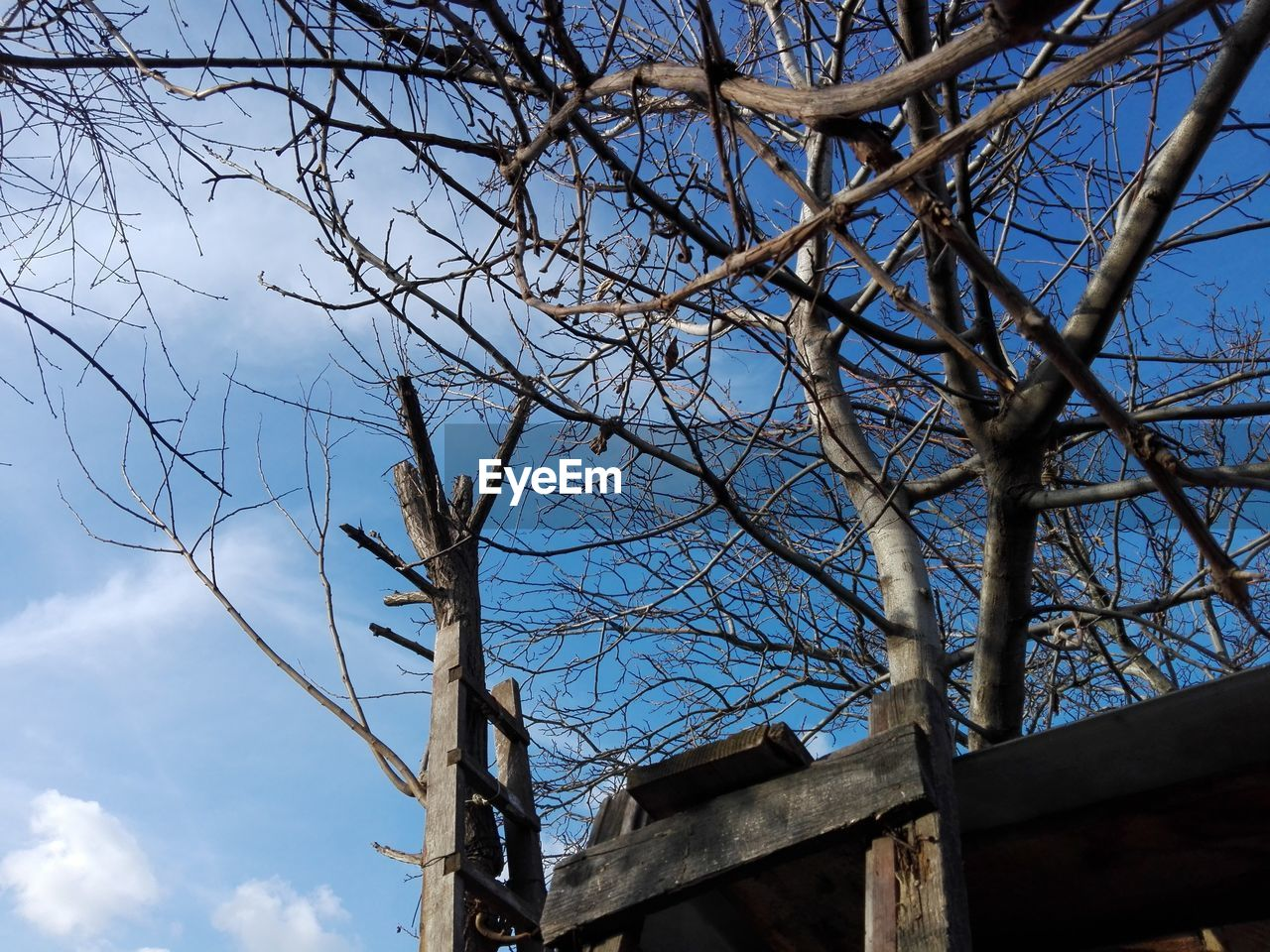 sky, bare tree, low angle view, tree, branch, cloud - sky, no people, built structure, nature, architecture, blue, plant, day, outdoors, wood - material, building exterior, fuel and power generation, old, building, connection