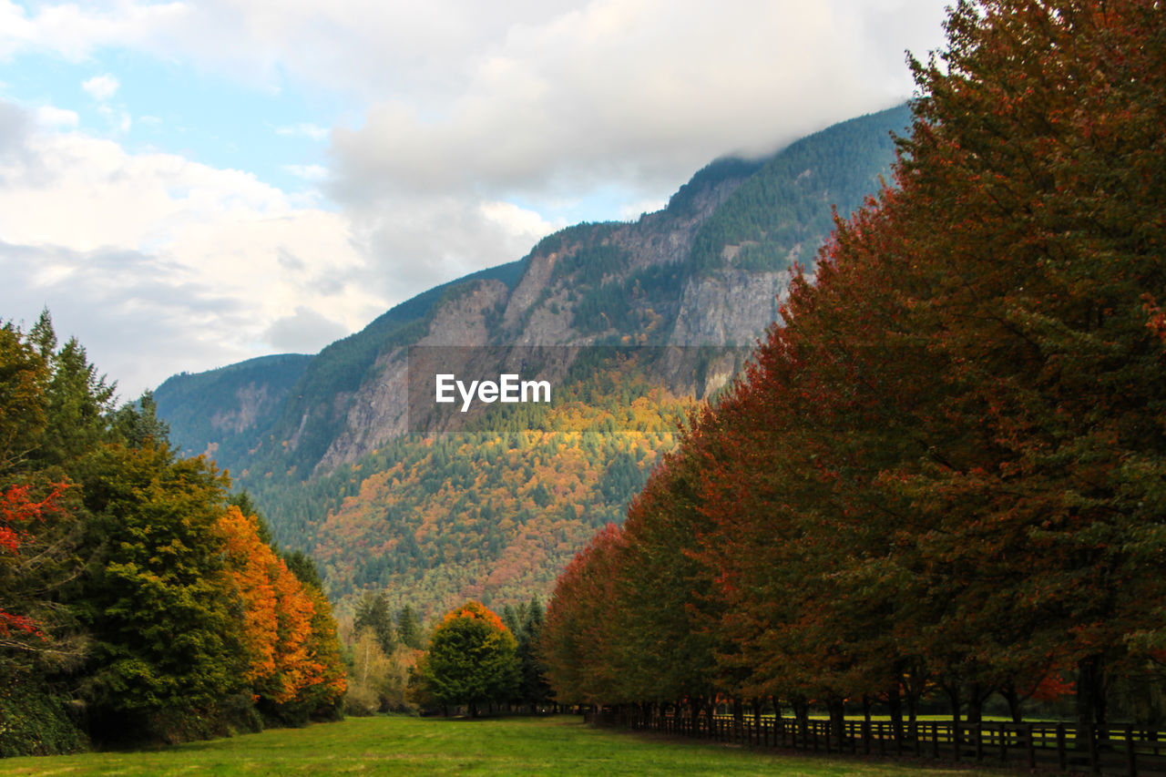 autumn, cloud - sky, beauty in nature, tree, sky, plant, scenics - nature, mountain, nature, tranquility, change, tranquil scene, day, no people, non-urban scene, growth, landscape, land, environment, orange color, outdoors, fall, autumn collection