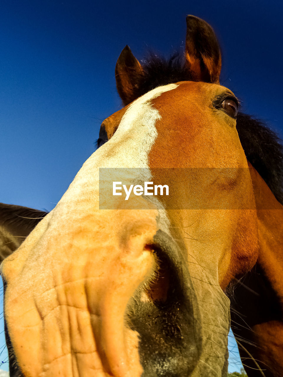 mammal, animal themes, animal, domestic animals, one animal, domestic, livestock, pets, vertebrate, animal wildlife, horse, animal body part, animal head, sky, no people, close-up, working animal, herbivorous, brown, clear sky, outdoors, animal nose, animal mouth, animal eye