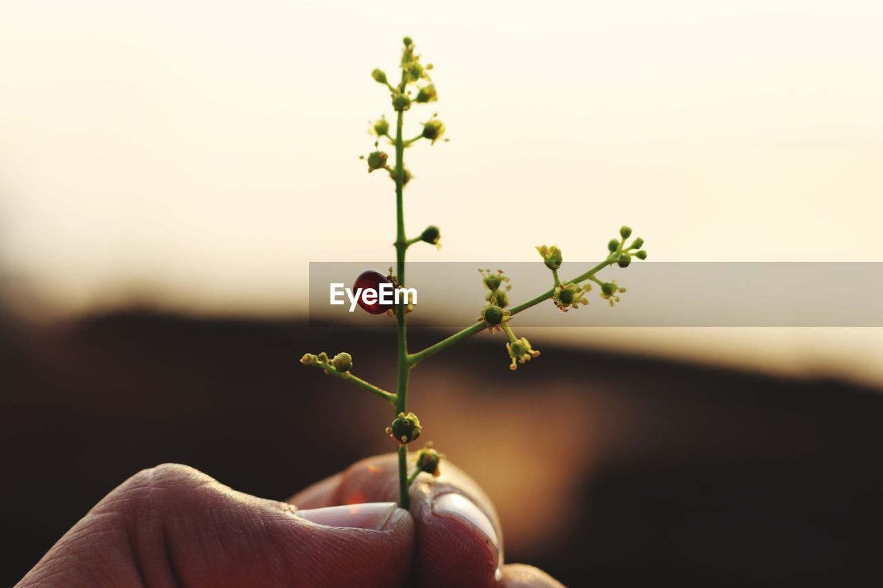 human hand, human body part, focus on foreground, one person, holding, human finger, real people, nature, outdoors, red, close-up, plant, day, beauty in nature, flower, sky, freshness, people