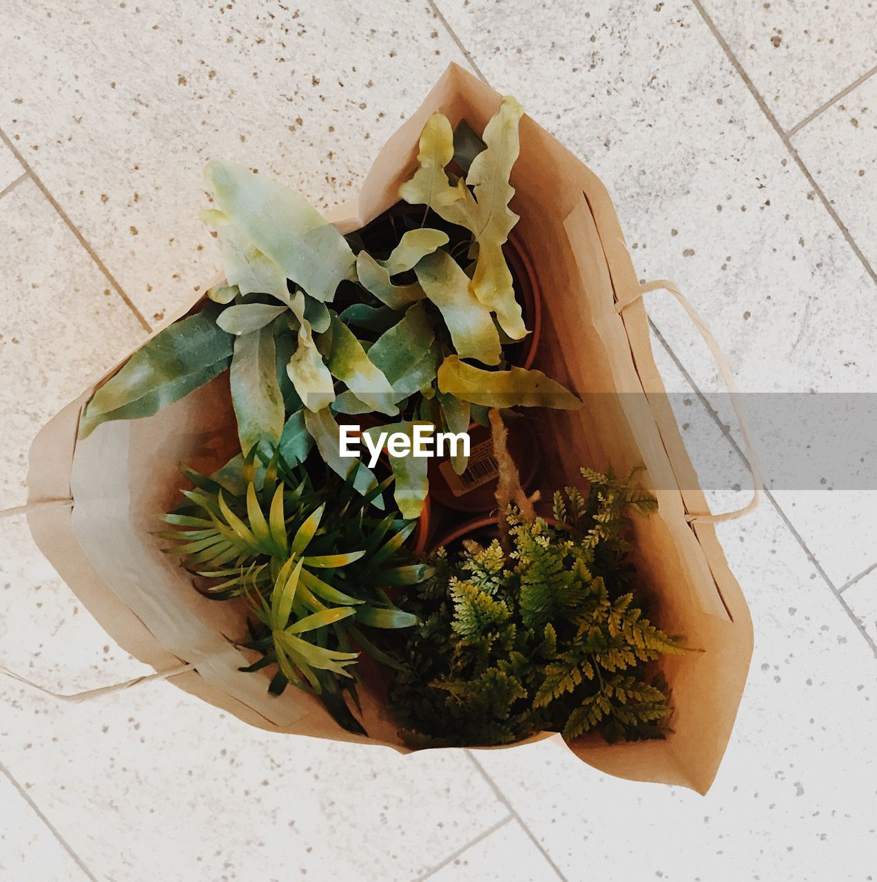 HIGH ANGLE VIEW OF POTTED PLANT IN PLATE ON TABLE