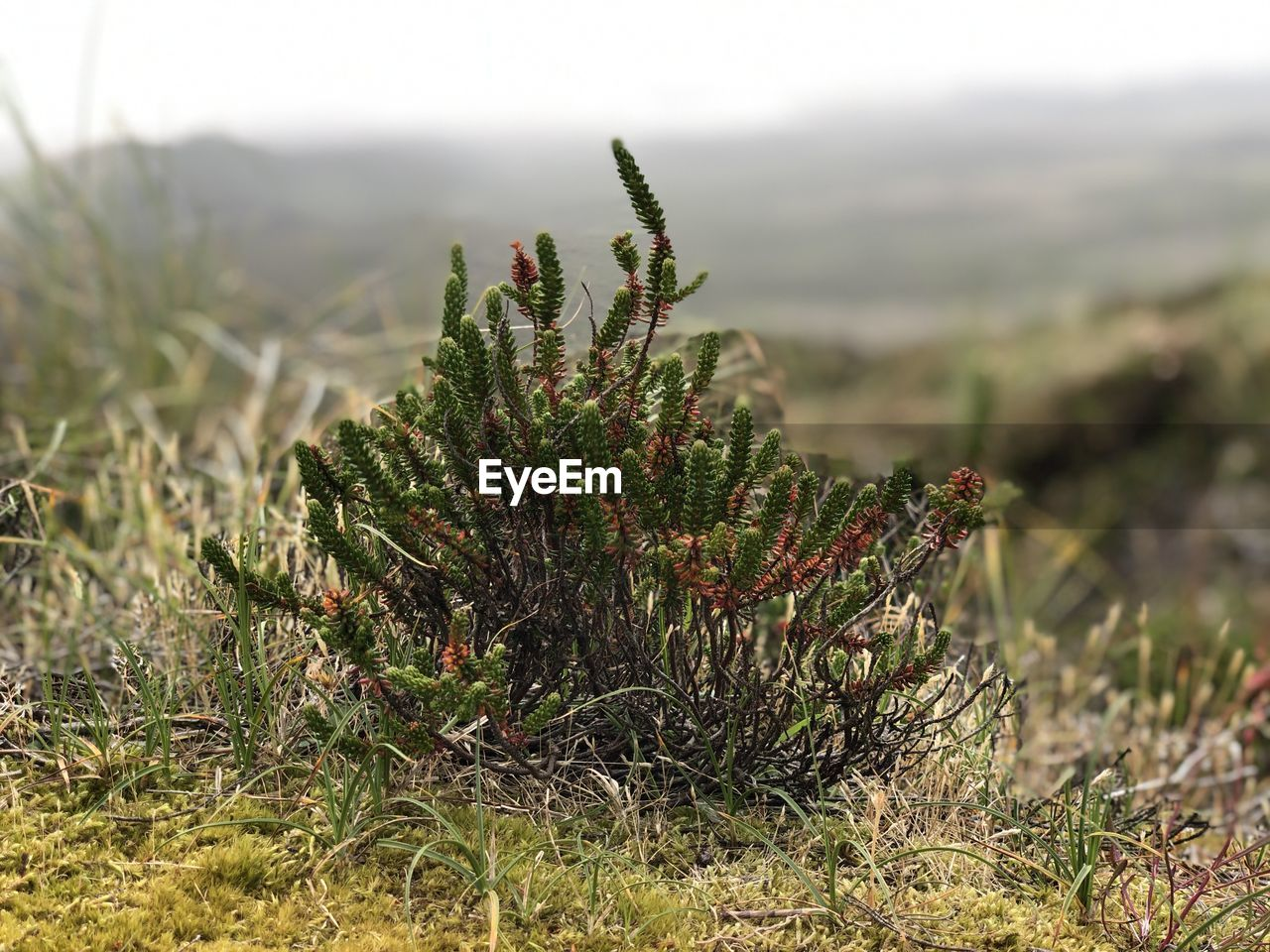 plant, growth, nature, beauty in nature, green color, day, no people, focus on foreground, land, field, tranquility, close-up, outdoors, succulent plant, selective focus, environment, cactus, grass, non-urban scene, thorn, coniferous tree