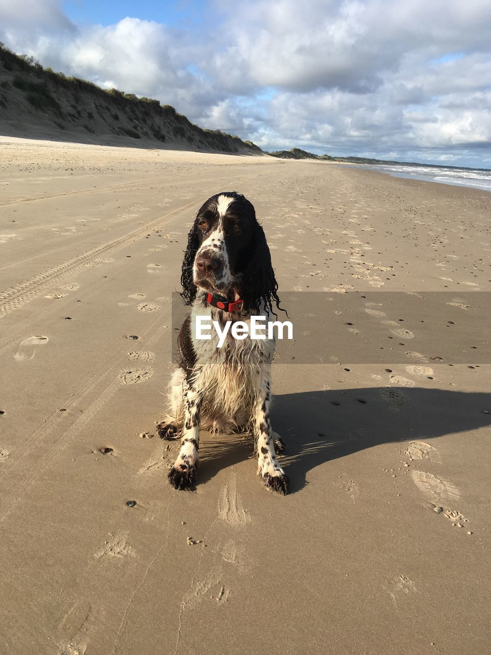 canine, dog, pets, one animal, domestic animals, land, domestic, beach, mammal, animal themes, animal, sand, cloud - sky, sky, nature, vertebrate, sunlight, water, sea, beauty in nature, no people, outdoors