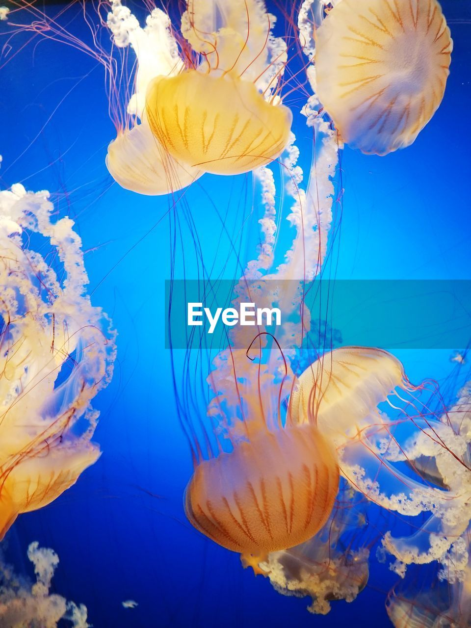 jellyfish, underwater, water, swimming, sea life, smooth, floating in water, close-up, no people, group of animals, studio shot, beauty in nature, animal themes