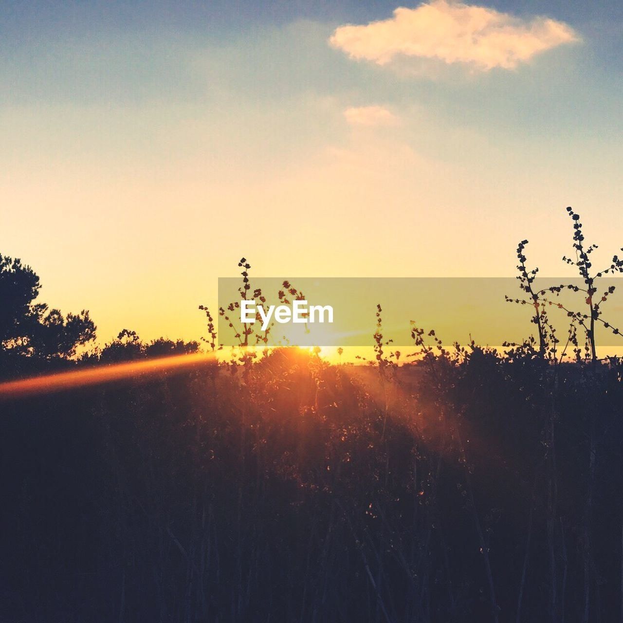 sunset, nature, silhouette, sun, tree, growth, sunlight, no people, sky, landscape, outdoors, plant, beauty in nature, scenics, grass, day