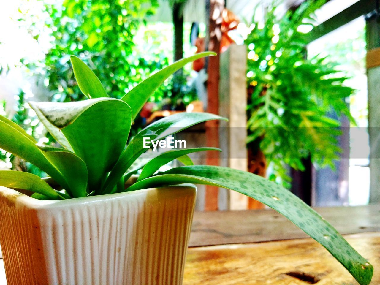 plant, leaf, plant part, green color, growth, nature, no people, focus on foreground, potted plant, close-up, indoors, freshness, day, wood - material, table, houseplant, beauty in nature, food, tree, flower pot