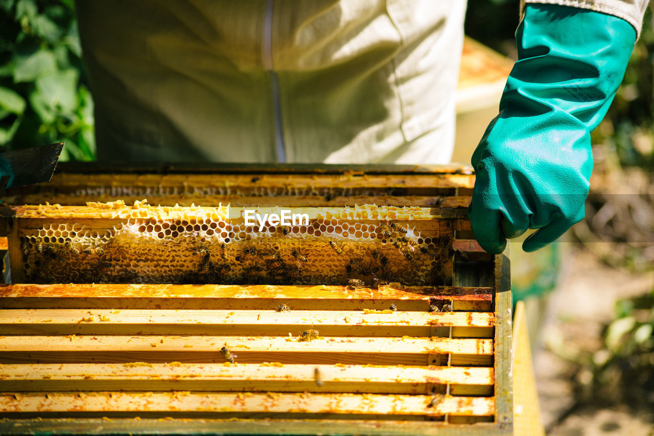 High Angle View Of Man Working On Beehive