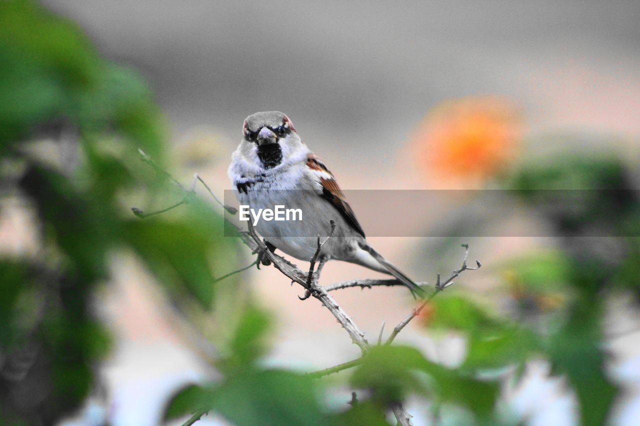 animal themes, animal, animals in the wild, one animal, animal wildlife, bird, vertebrate, plant, perching, day, selective focus, no people, nature, focus on foreground, close-up, outdoors, tree, branch, beauty in nature, twig