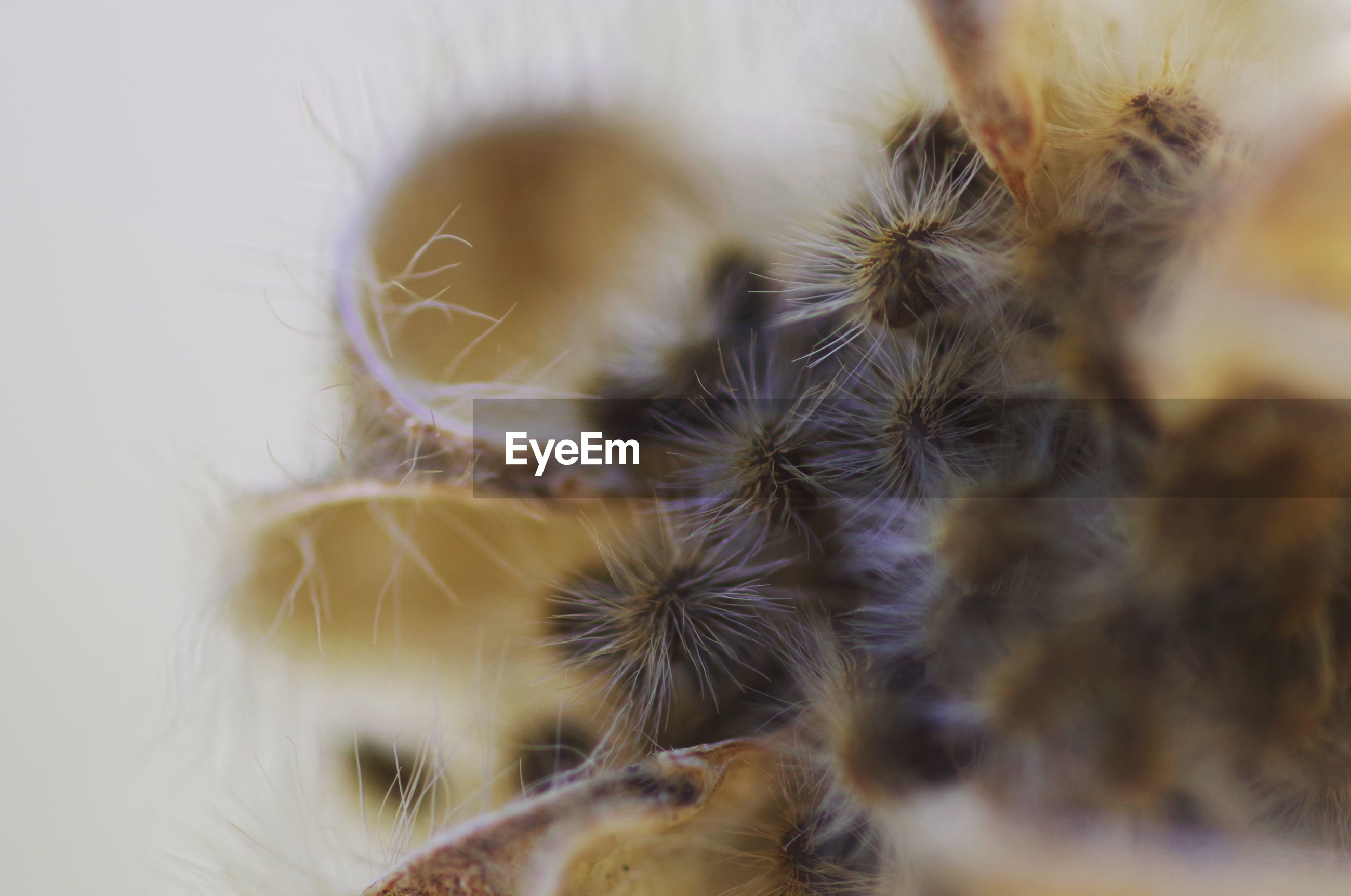 Extreme close-up of plant