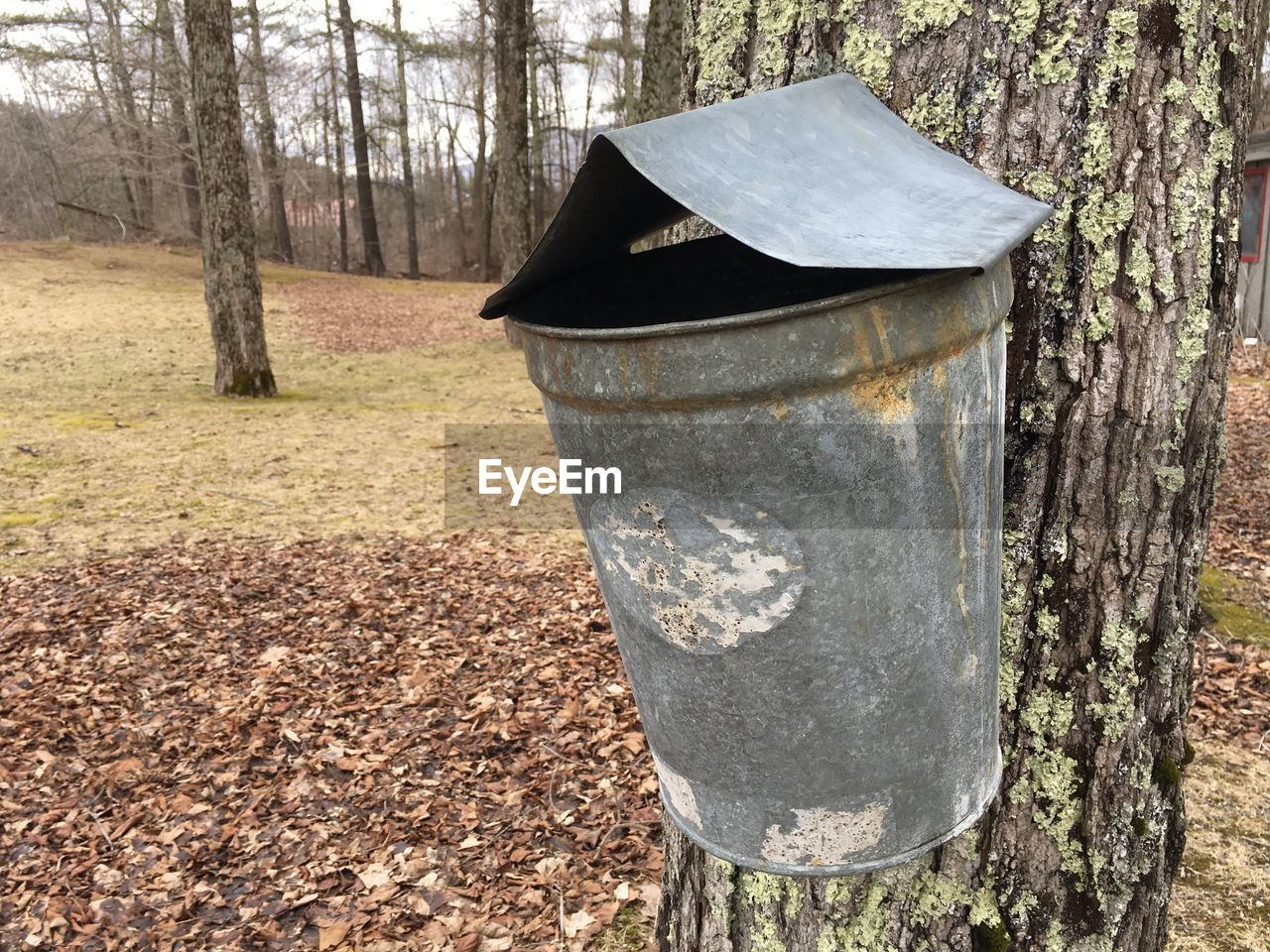tree, land, plant, trunk, tree trunk, nature, day, no people, forest, environment, outdoors, garbage bin, wood - material, recycling bin, field, landscape, non-urban scene, metal, woodland, tranquility