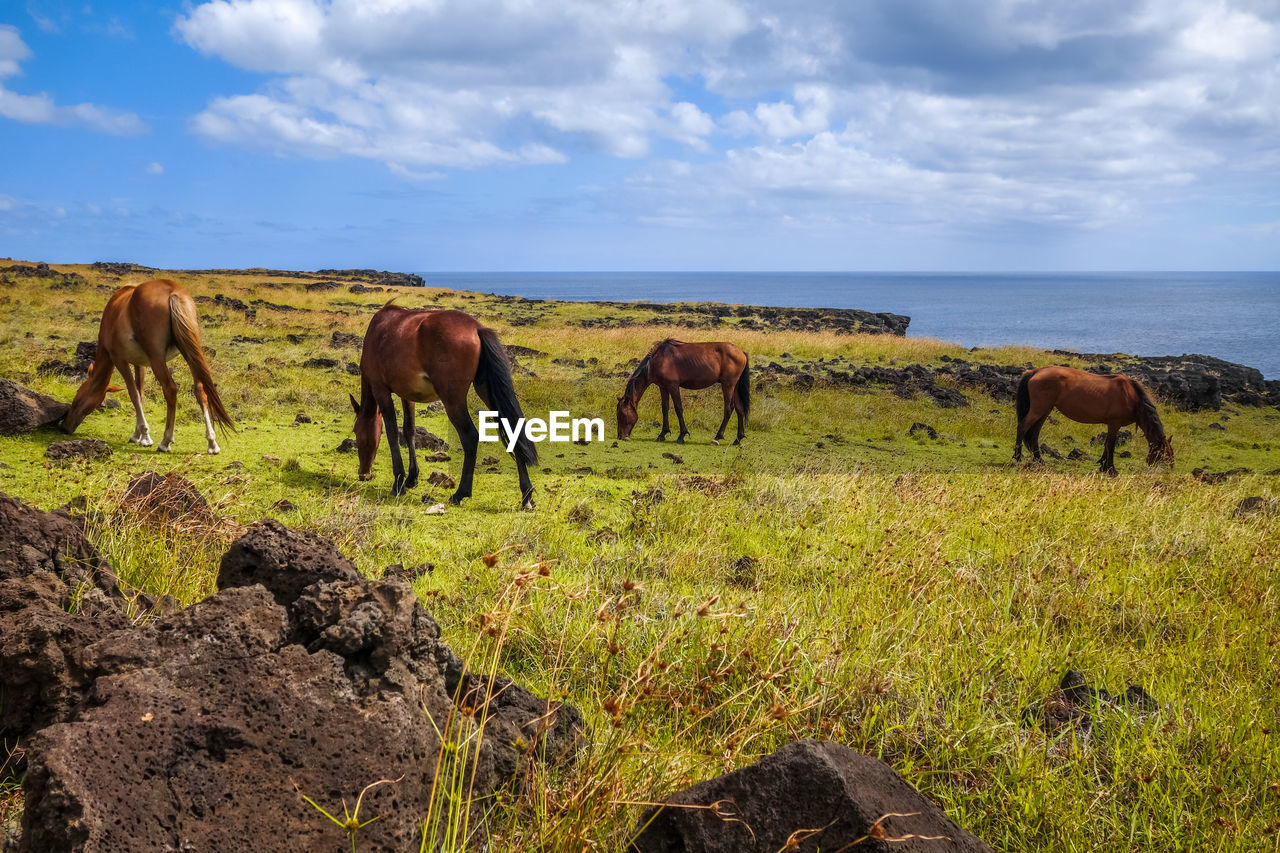 mammal, animal, animal themes, sky, group of animals, land, animal wildlife, cloud - sky, livestock, grass, domestic animals, nature, field, plant, vertebrate, horse, water, grazing, domestic, beauty in nature, no people, herbivorous, horizon over water, outdoors