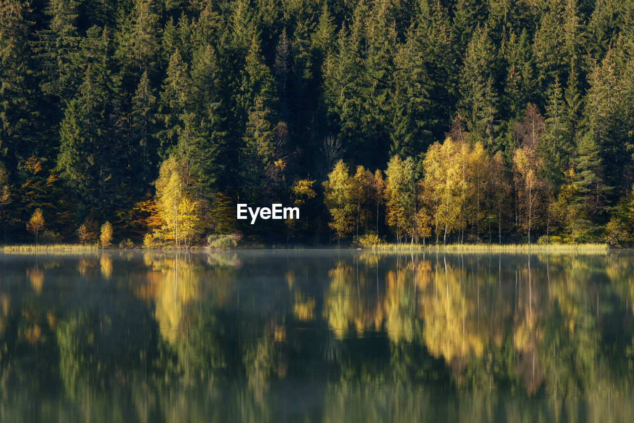 tree, lake, reflection, water, plant, beauty in nature, tranquility, tranquil scene, scenics - nature, forest, no people, nature, day, growth, non-urban scene, waterfront, green color, autumn, land, outdoors, coniferous tree, pine woodland, reflection lake
