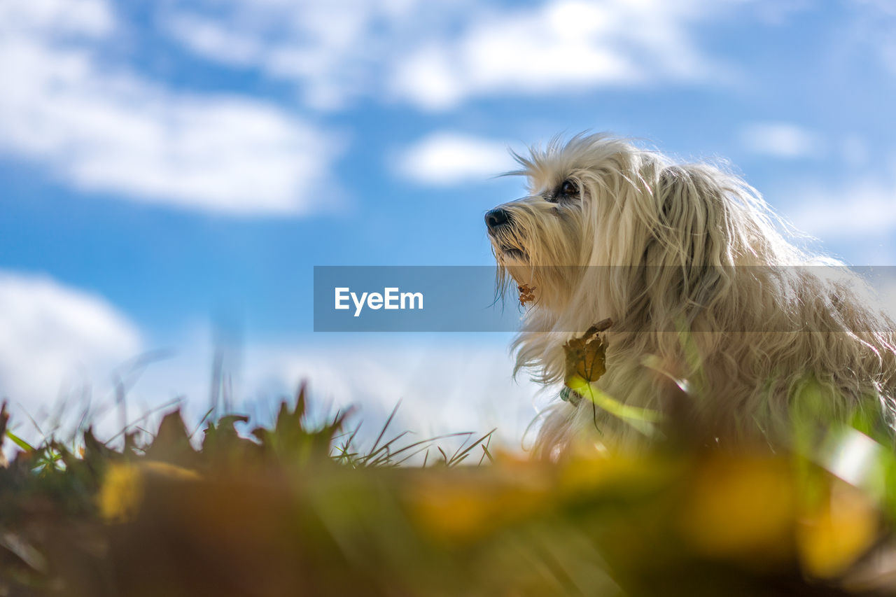 pets, dog, one animal, domestic animals, mammal, animal themes, sky, day, nature, no people, outdoors, close-up
